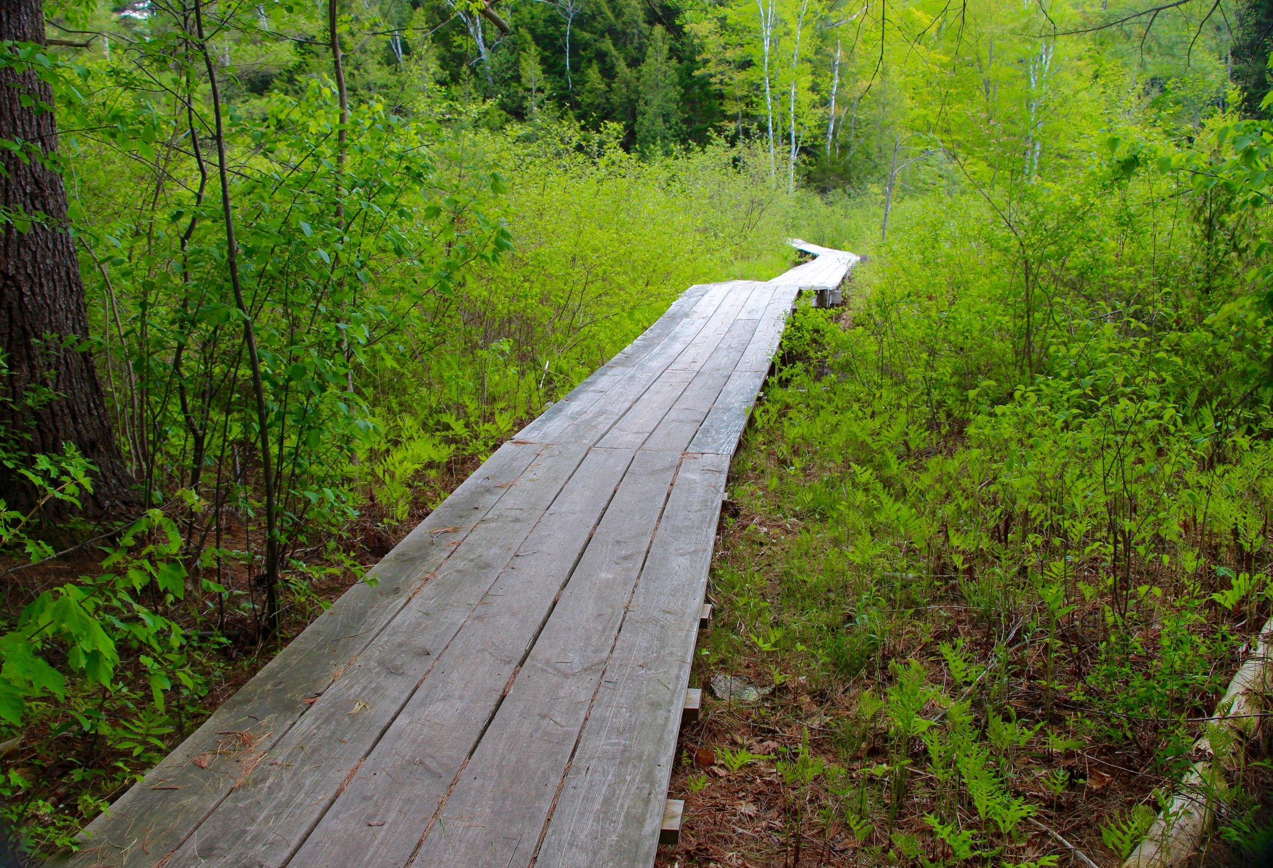 Adirondack_Woods_1.jpg