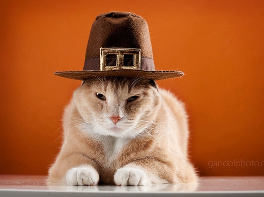 thanksgiving_pilgrim_cats_02.jpg
