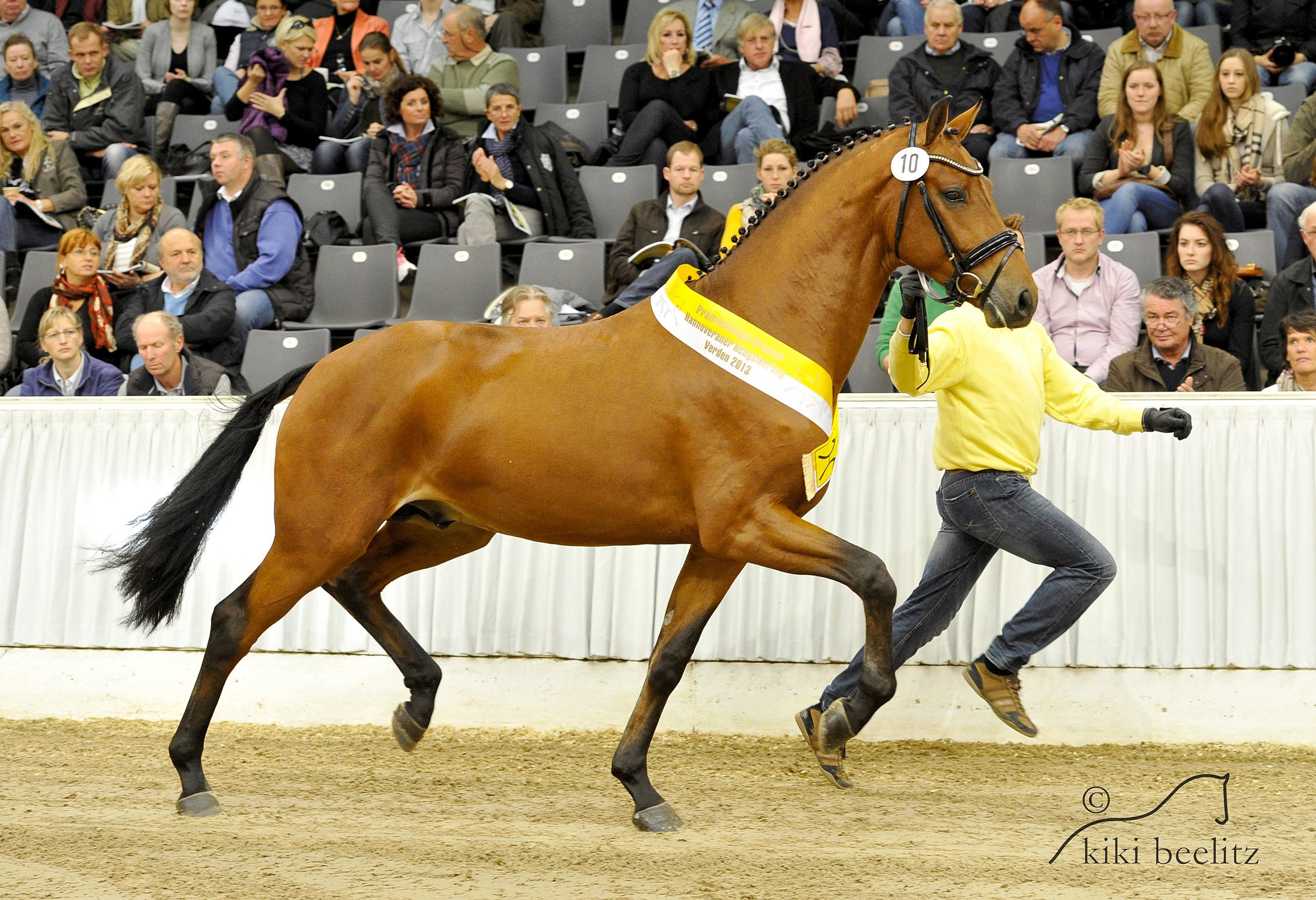 Licensed Son by Hanoverian Stud Book