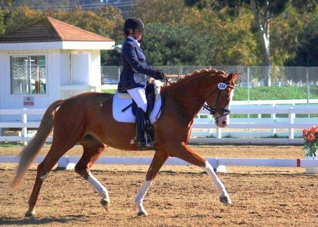 Carette MG (His Highness-Torette MG, Olympic Silvano)
