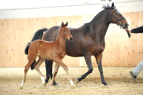 Filly (First Dance, Aarking)
