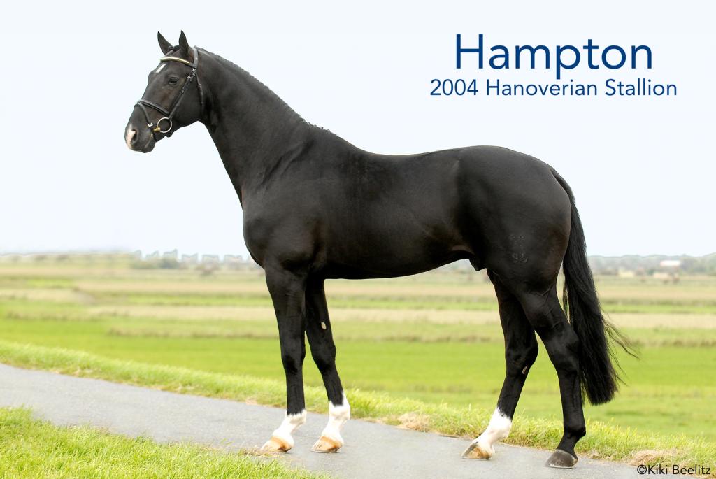 Hampton-1024x685.png