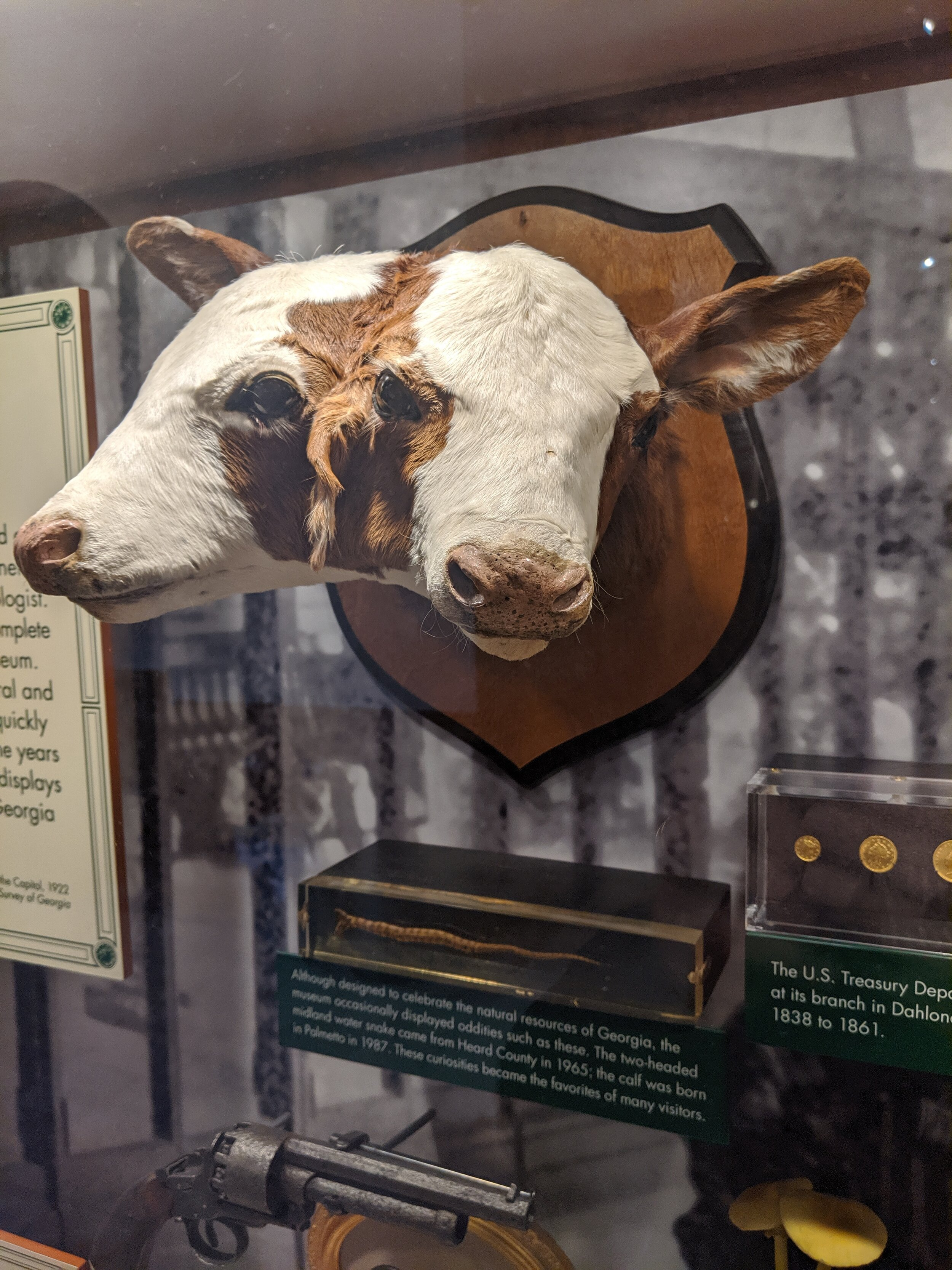 Legally, every state capitol must come with a two-headed calf.