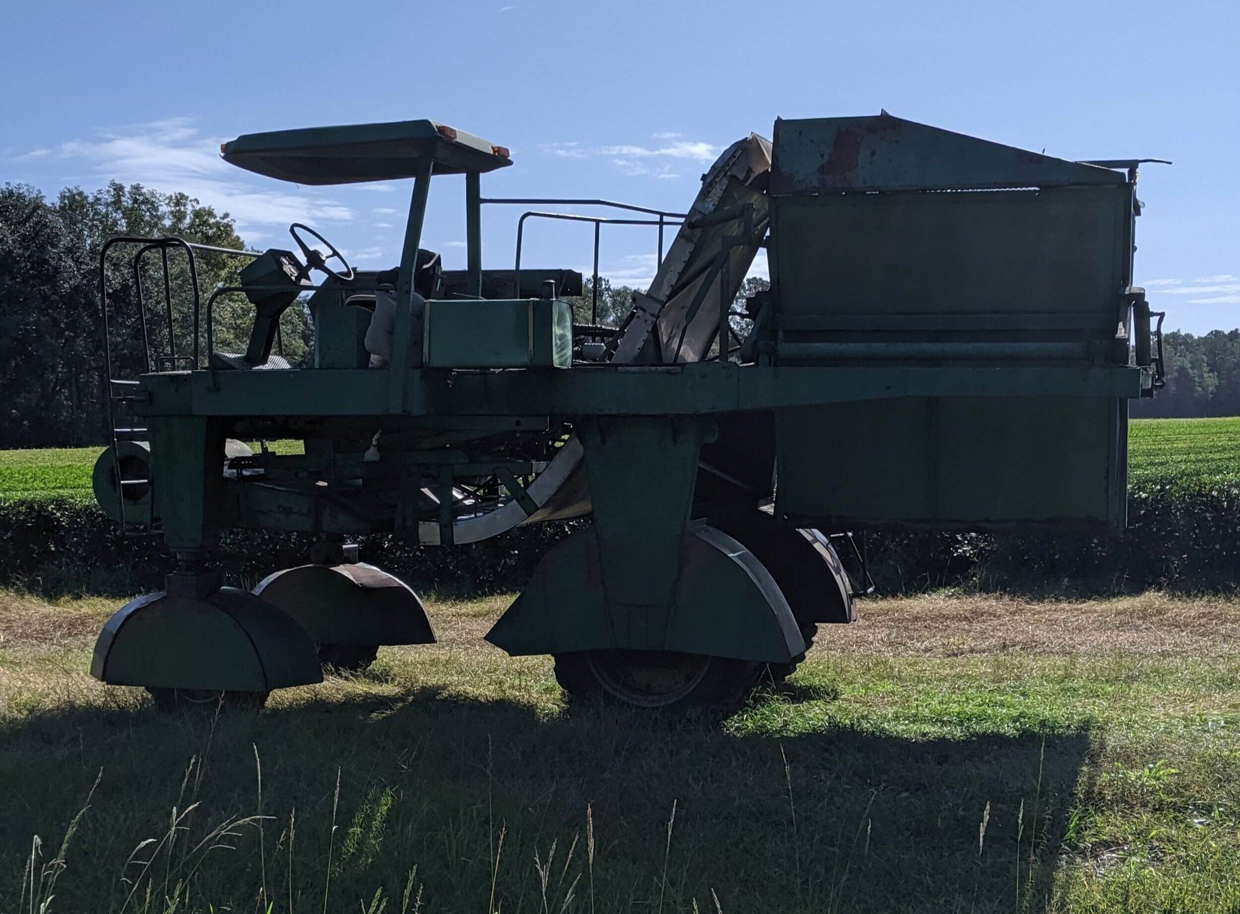 This custom built harvester goes over each of the rows—it takes only 4 guys to work the fields. One to run the harvester, two to walk ahead and weed, and one to drive a pickup to transfer the resulting loads to the plant.