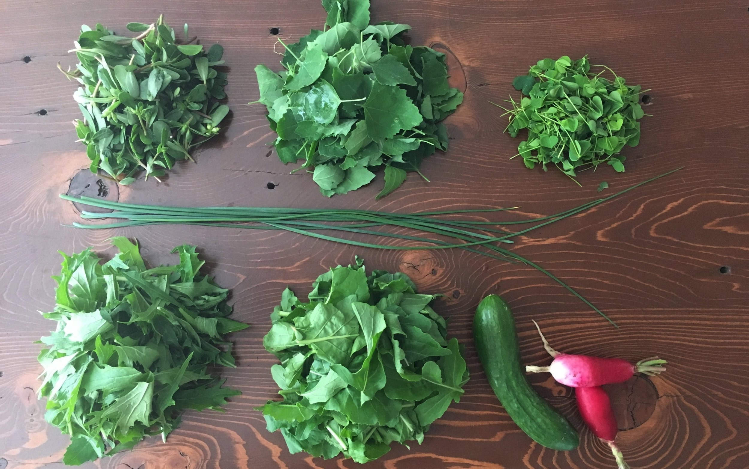 Garden fresh ingredients! Top row are foraged greens - purslane, lamb's quarters & sour grass (left to right). The two greens in the bottom row are mizuna and arugula (left to right).