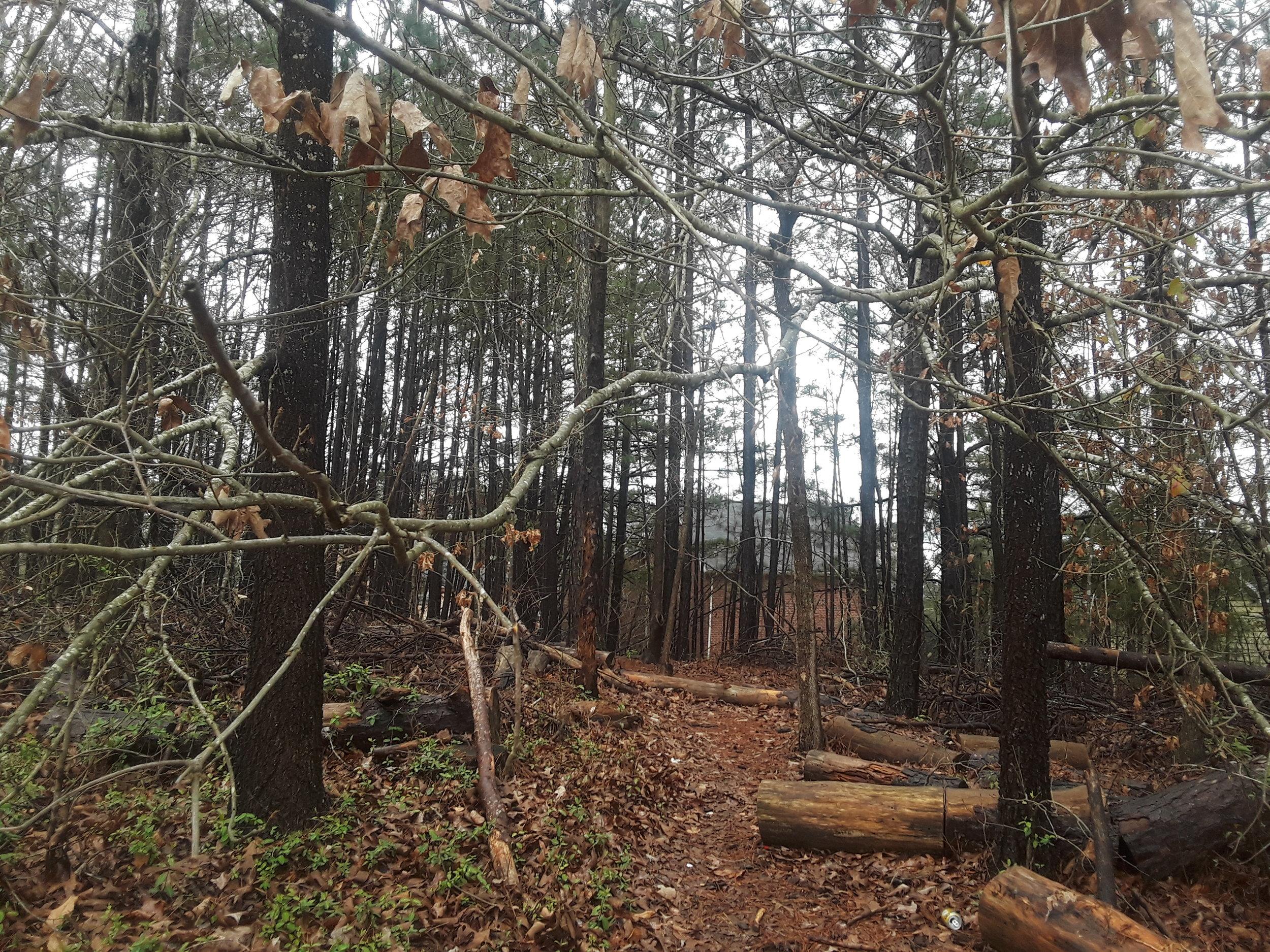 wood_trails.jpg