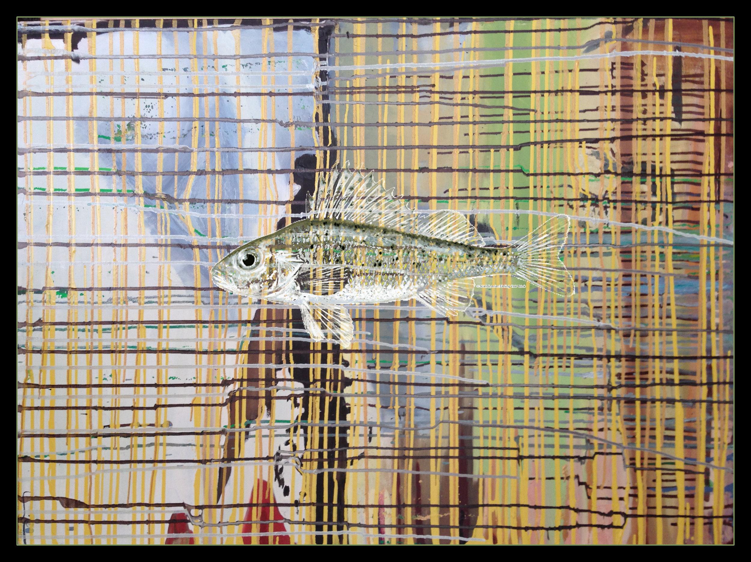"Walleye, 30""x40"" oil on canvas 2016"
