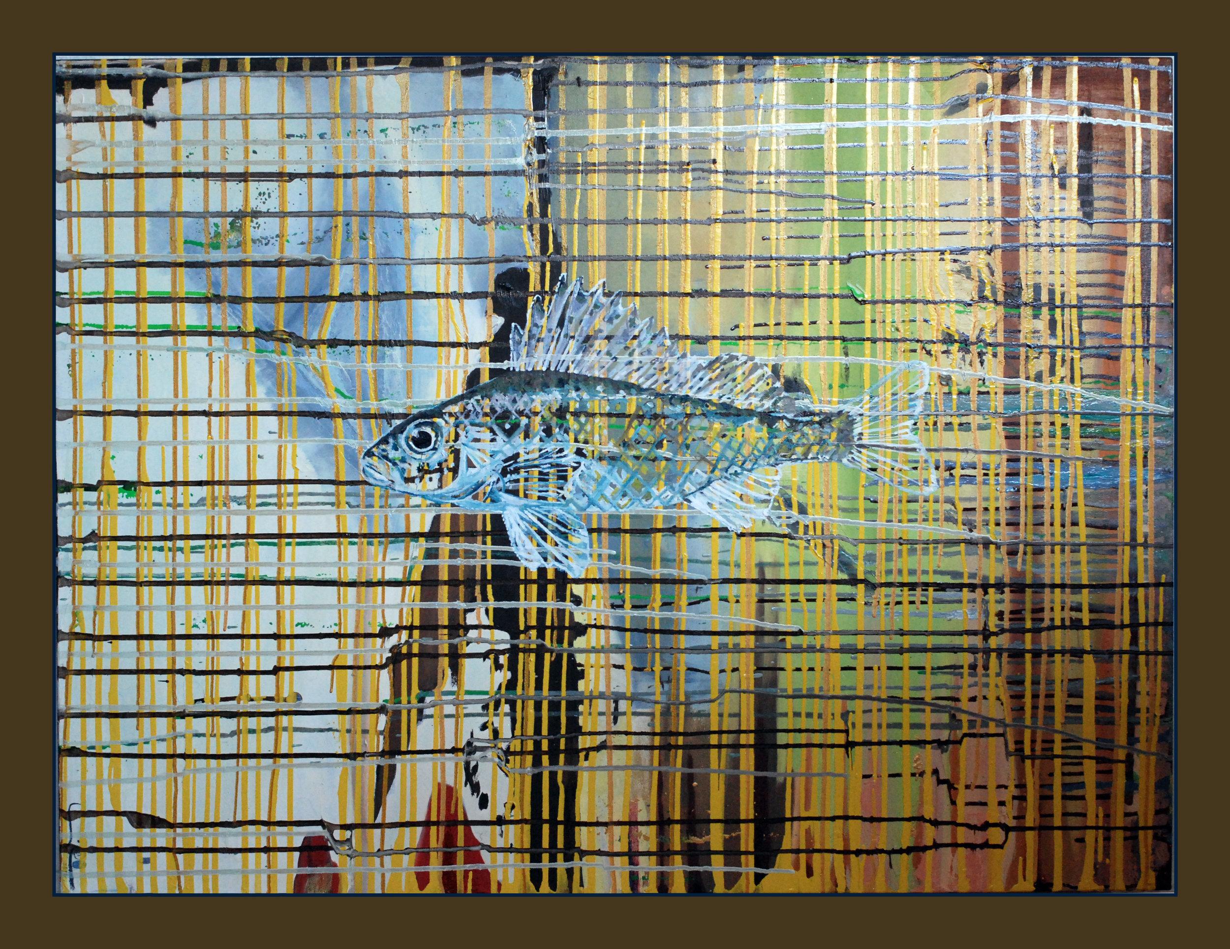 "Walleye , 30""x40""oil on canvas"