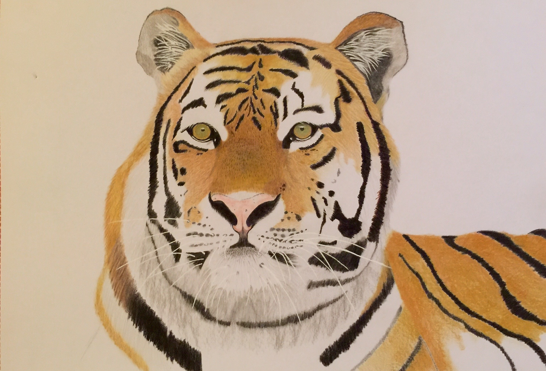 Colored Pencil Tiger