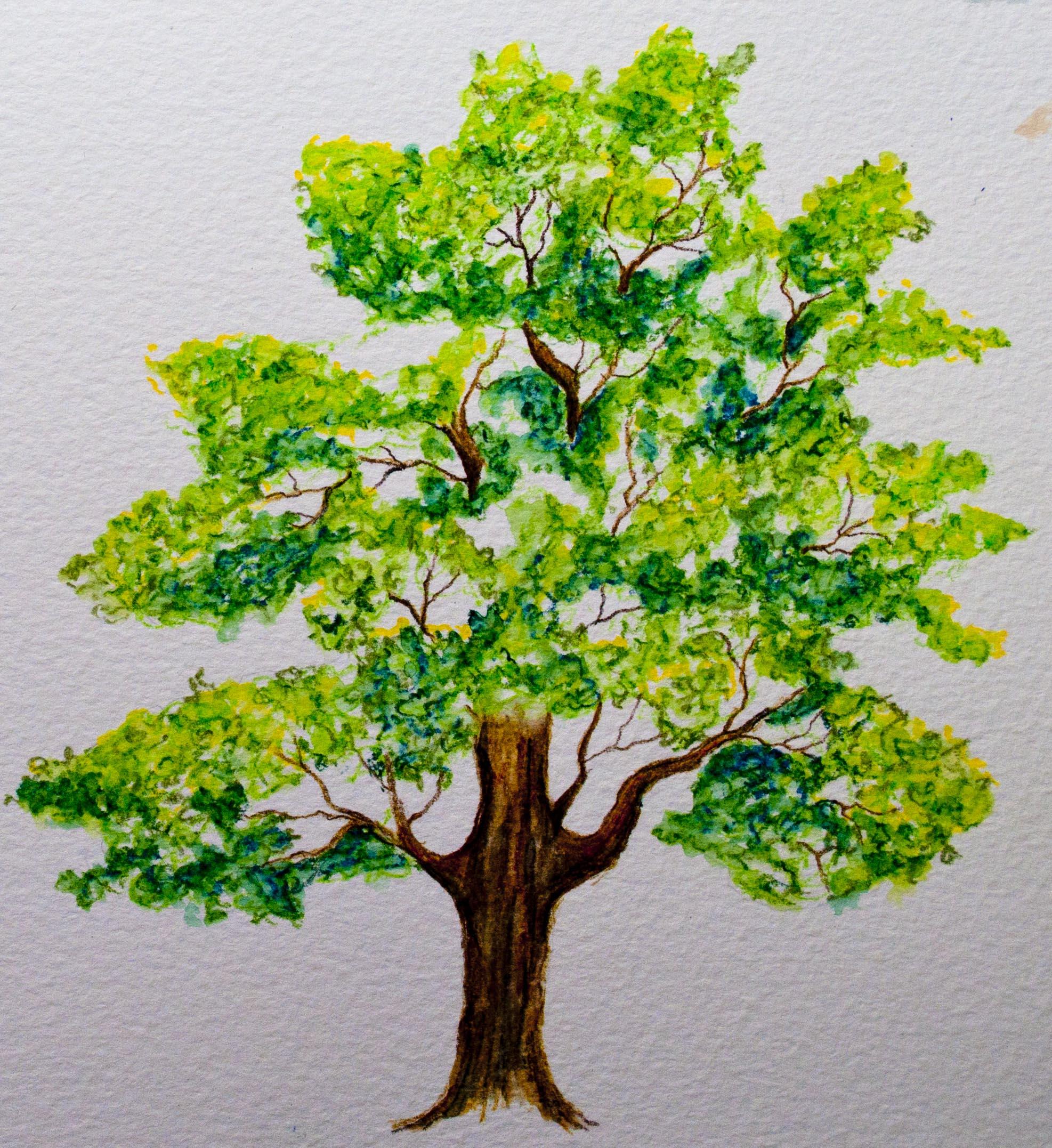 Koh-I-Noor Mondeluz on Bockingford Watercolor Paper