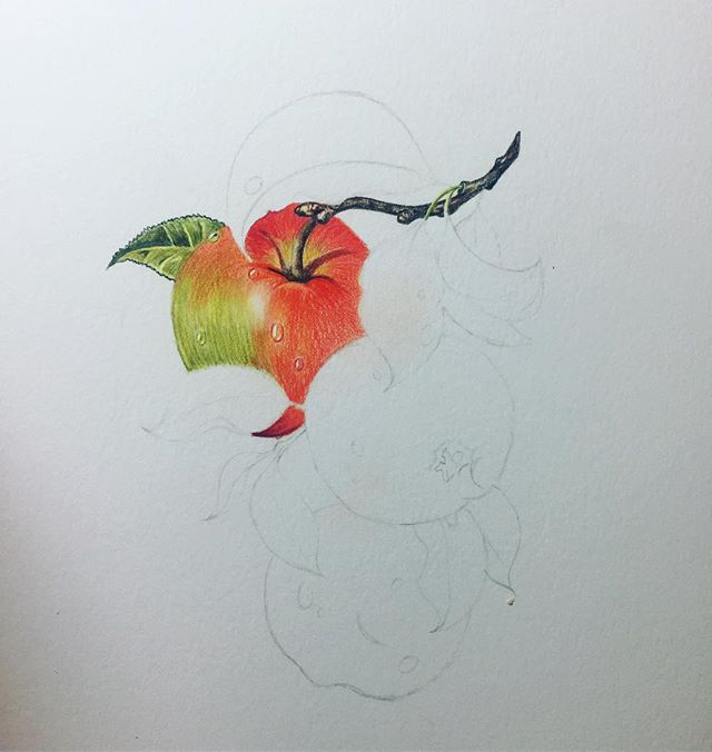 I have always loved looking at botanical type art and so today I thought I'd give it a go and so this is my WIP I am only using Caran D'Ache Pablo colored pencils on Strathmore 400 Series Bristol Smooth, I didn't want to use the really good paper the 500 Series in case it just didn't turn out well. So far I'm not too sure but I think I have to wait until it is finished before making a judgement on it.