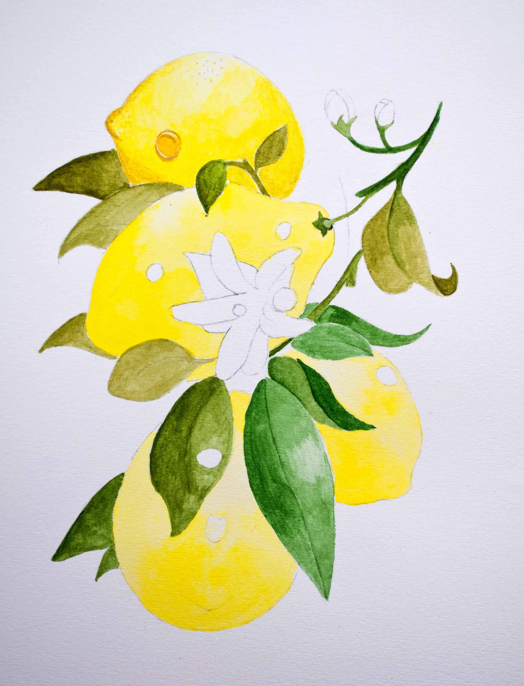 W&N Lemons image 1.jpg