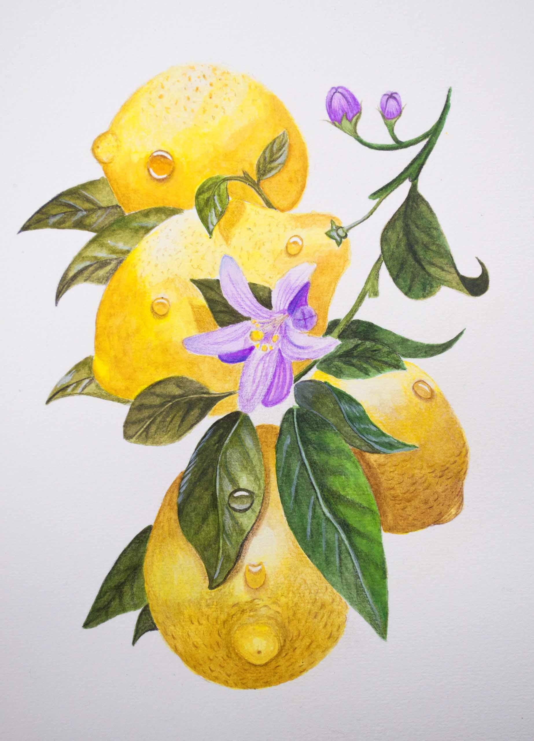 W&N Lemons Final Image .jpg