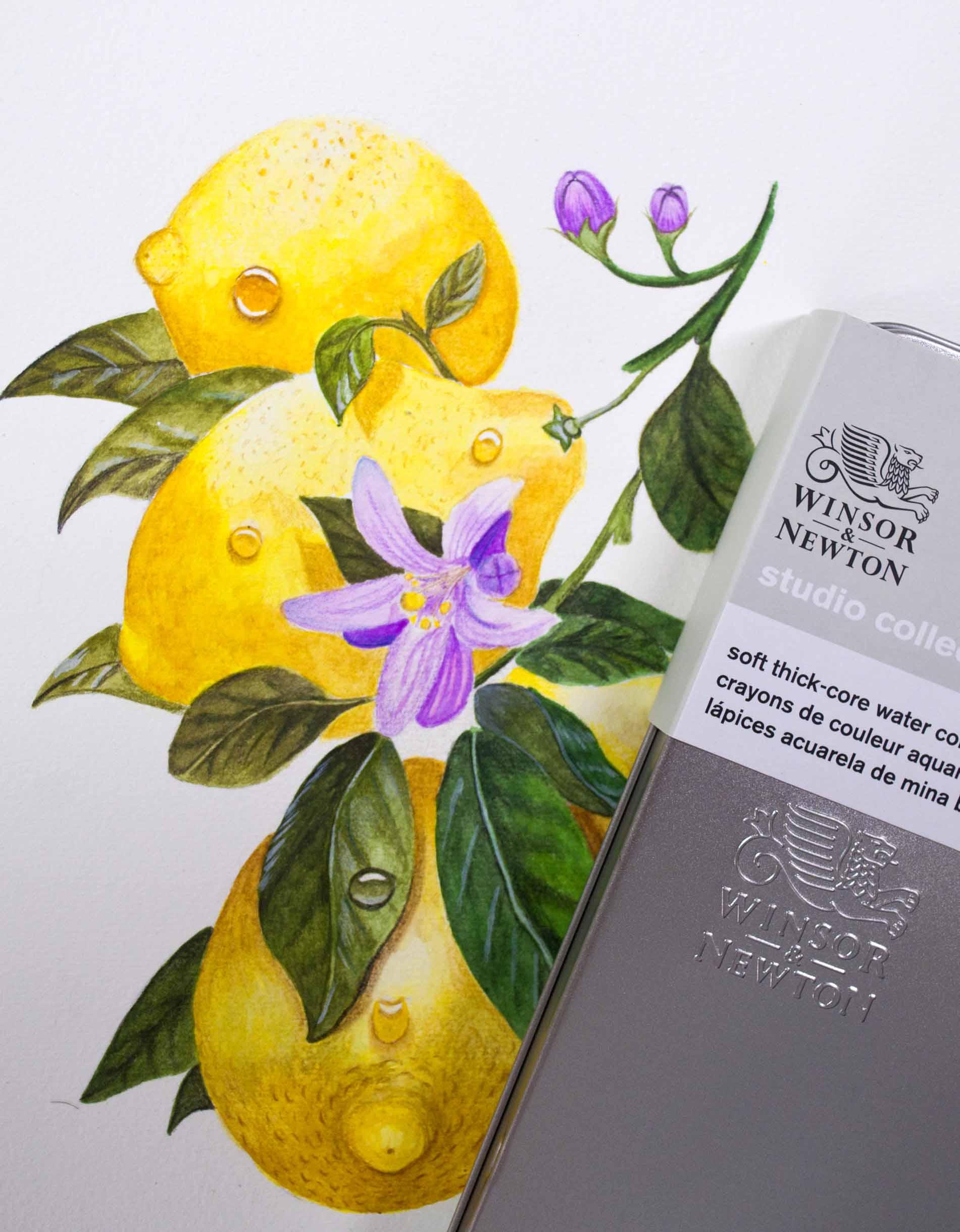 W&N Lemons With Tin and Logo .jpg