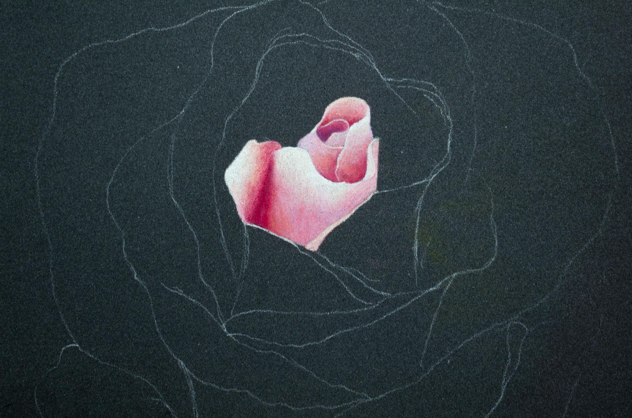 Derwent Artist Rose One .jpg