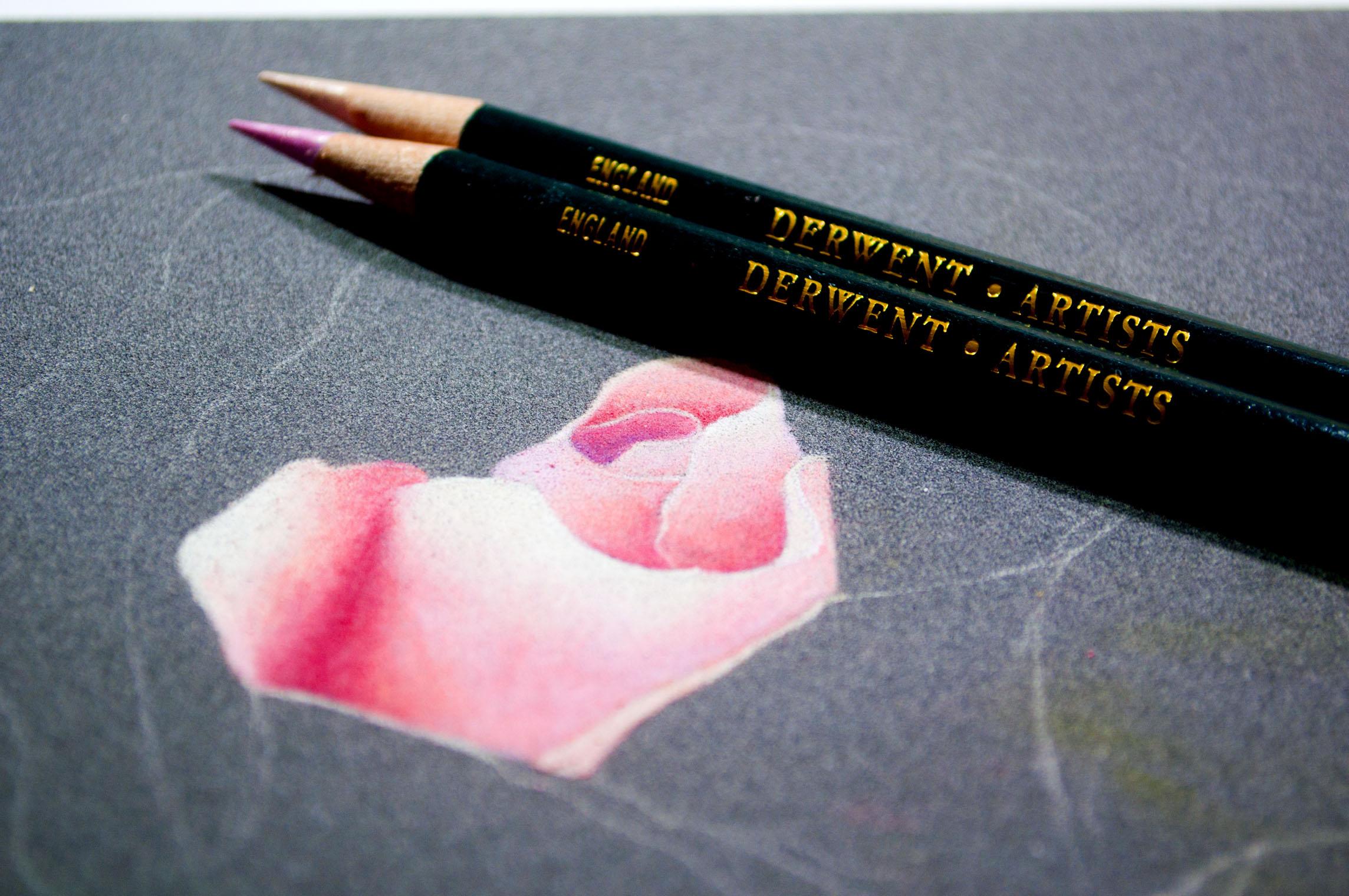 Derwent Artist Rose Image 1 Design.jpg