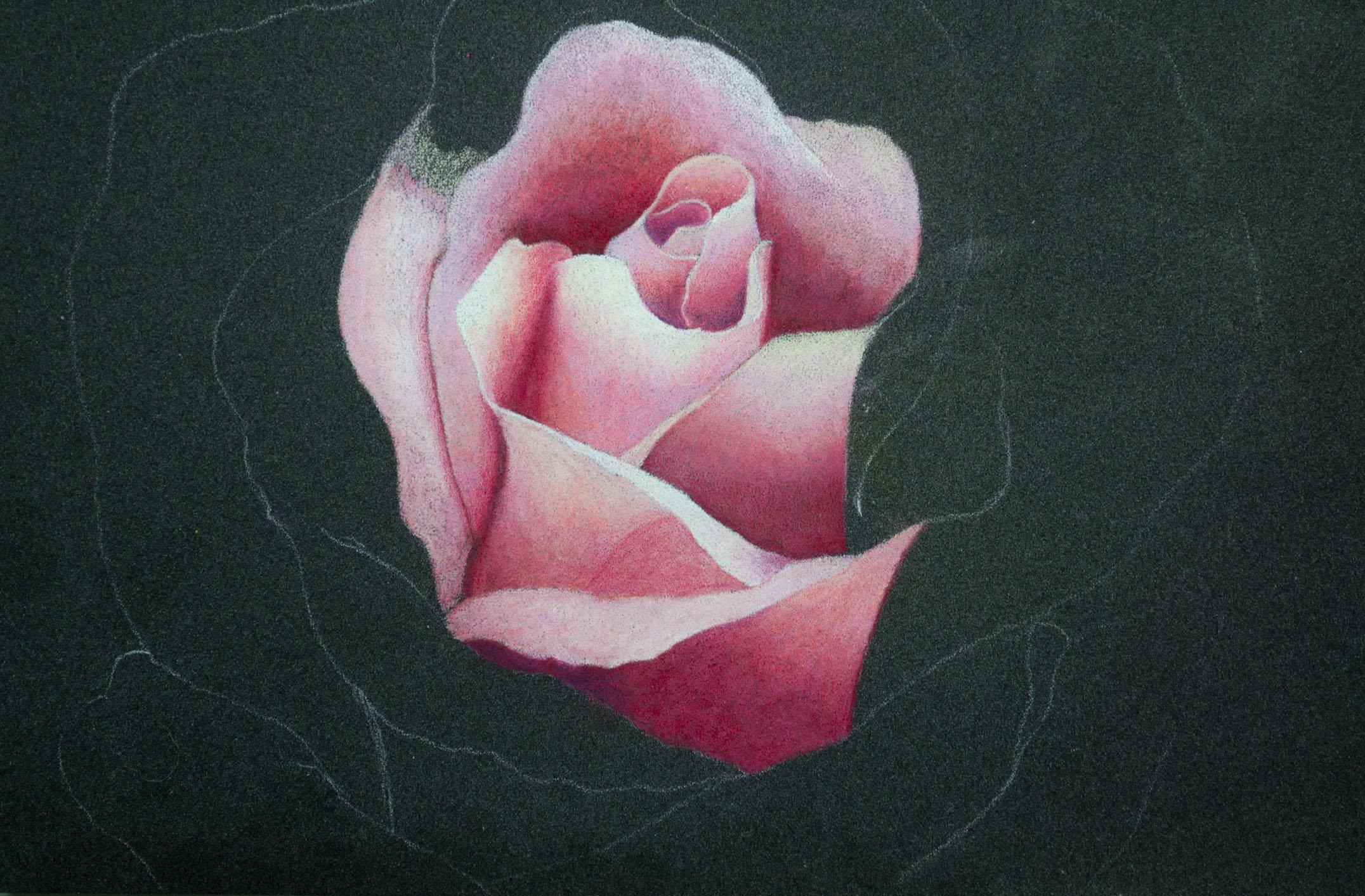 Derwent Artist Rose Image 2.jpg