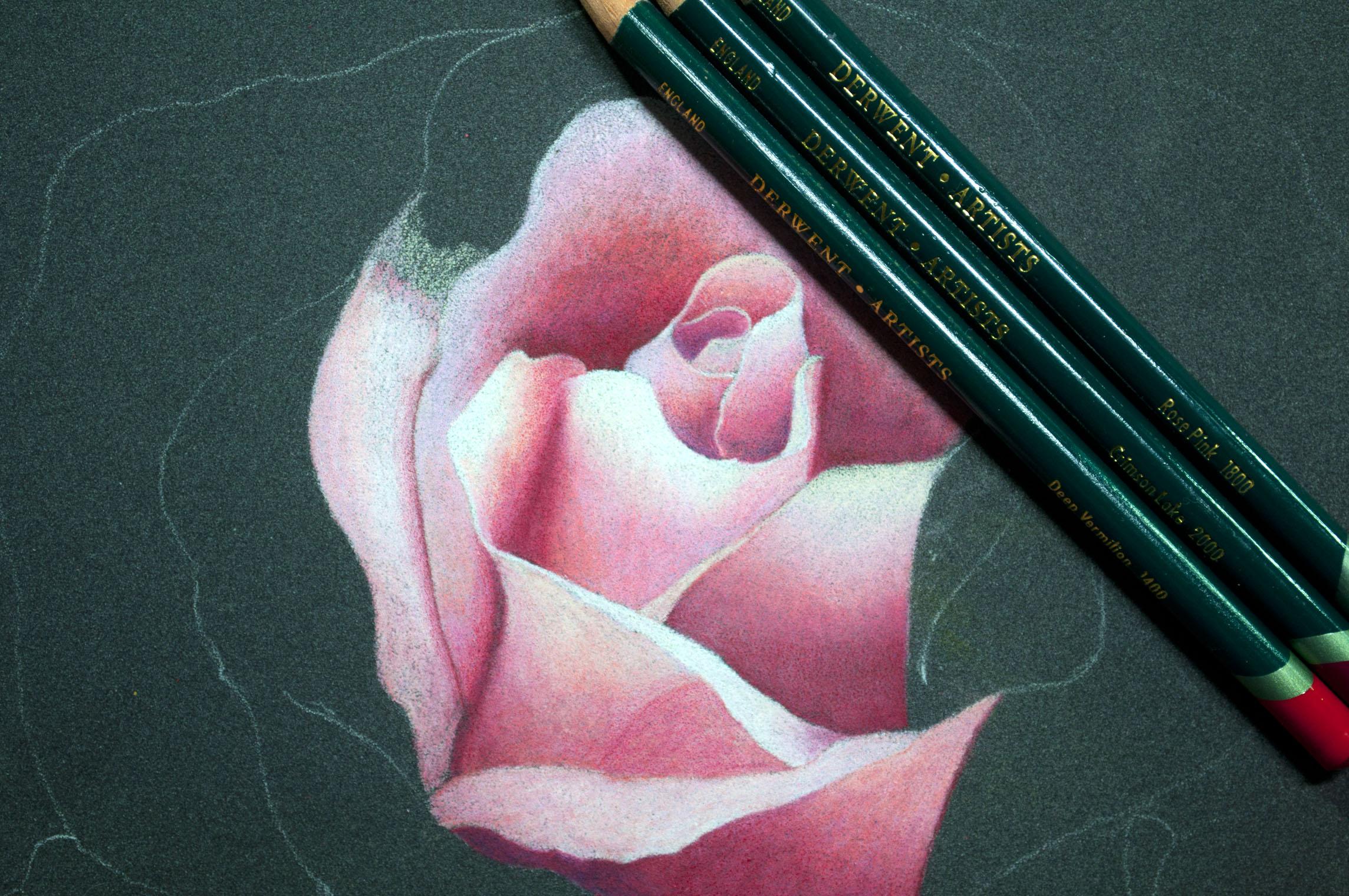 Derwent Artist Rose Image 4.jpg