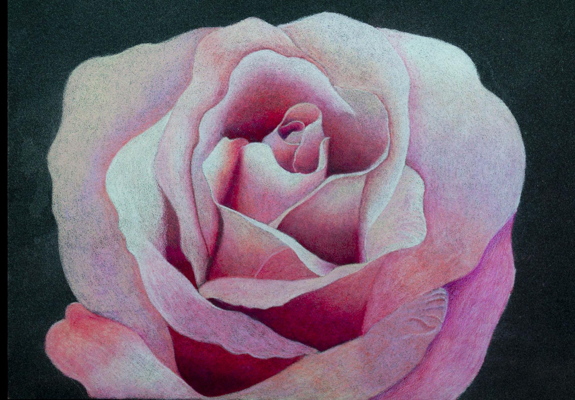 Derwent Artist Final Image Rose.jpg