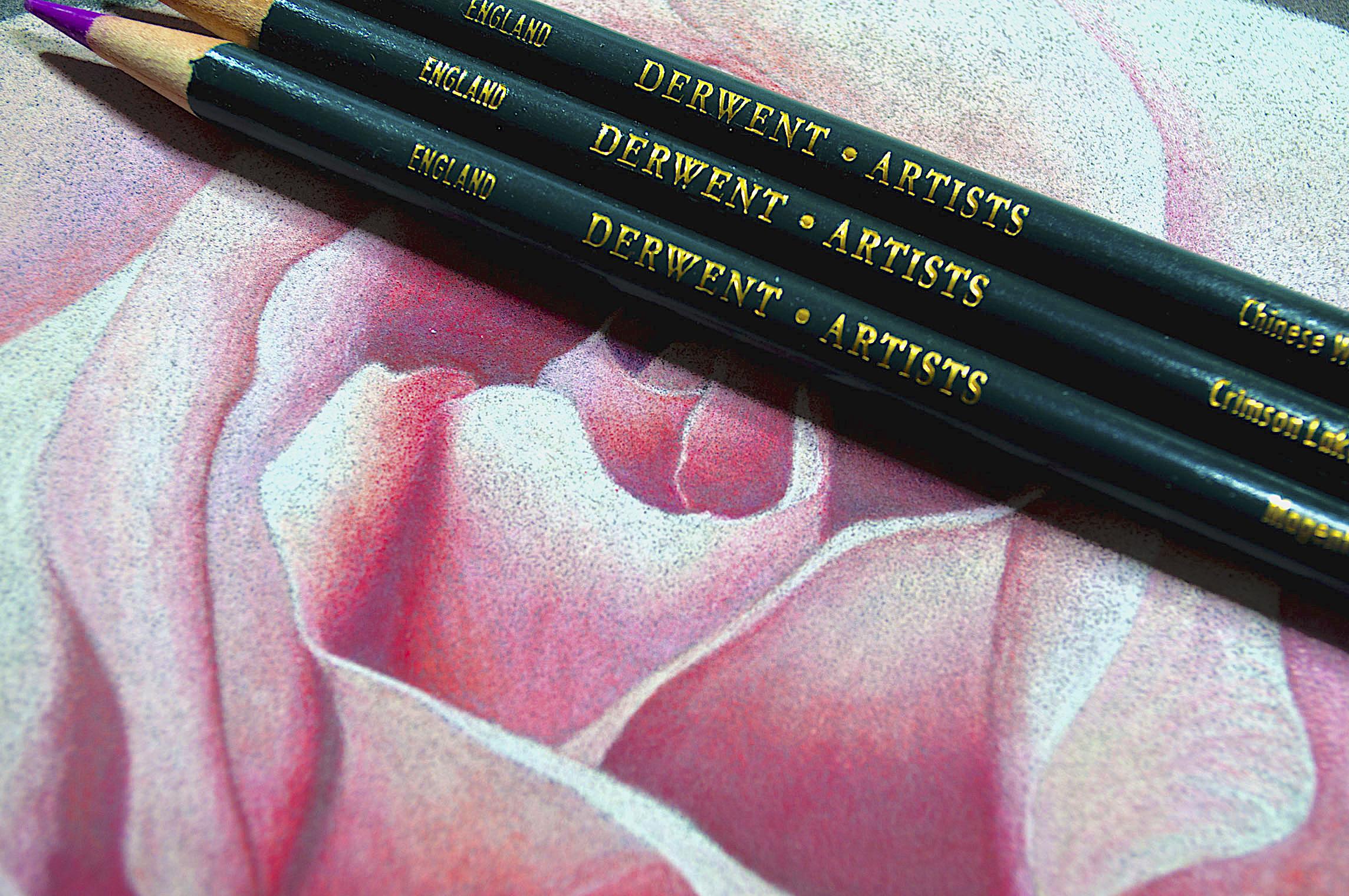 Derwent Artist Rose With Pencils.jpg