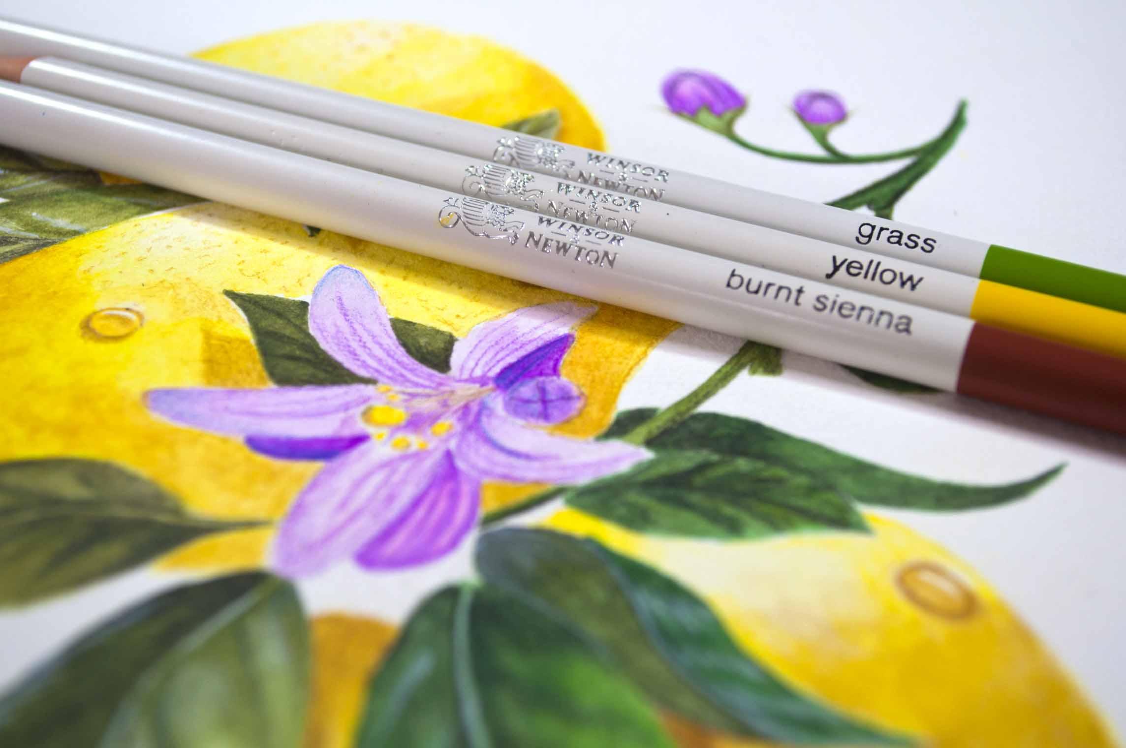 W&N Lemons with 3 pencils design shot.jpg