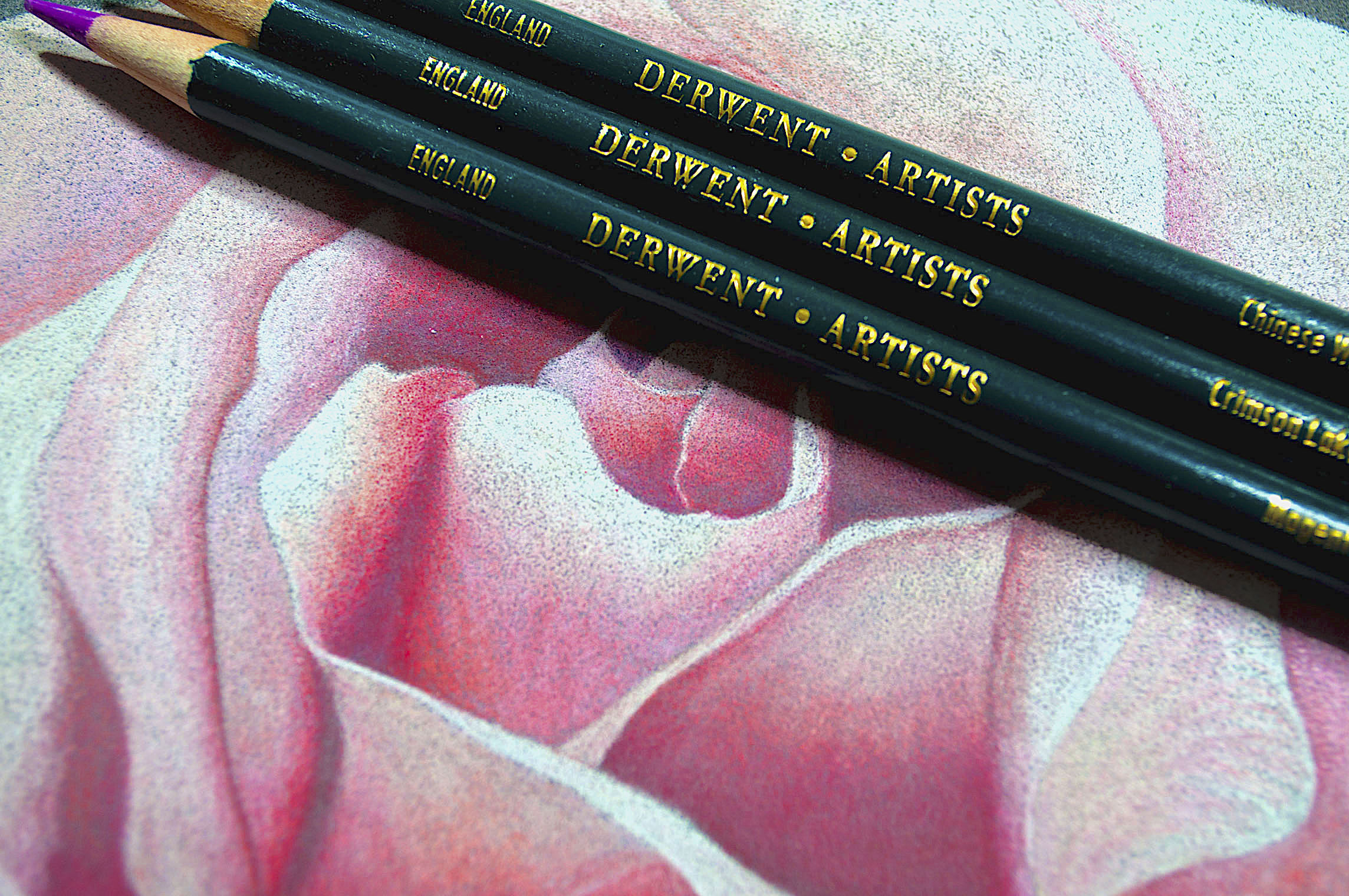 Derwent Artist Rose With Pencils.jpg