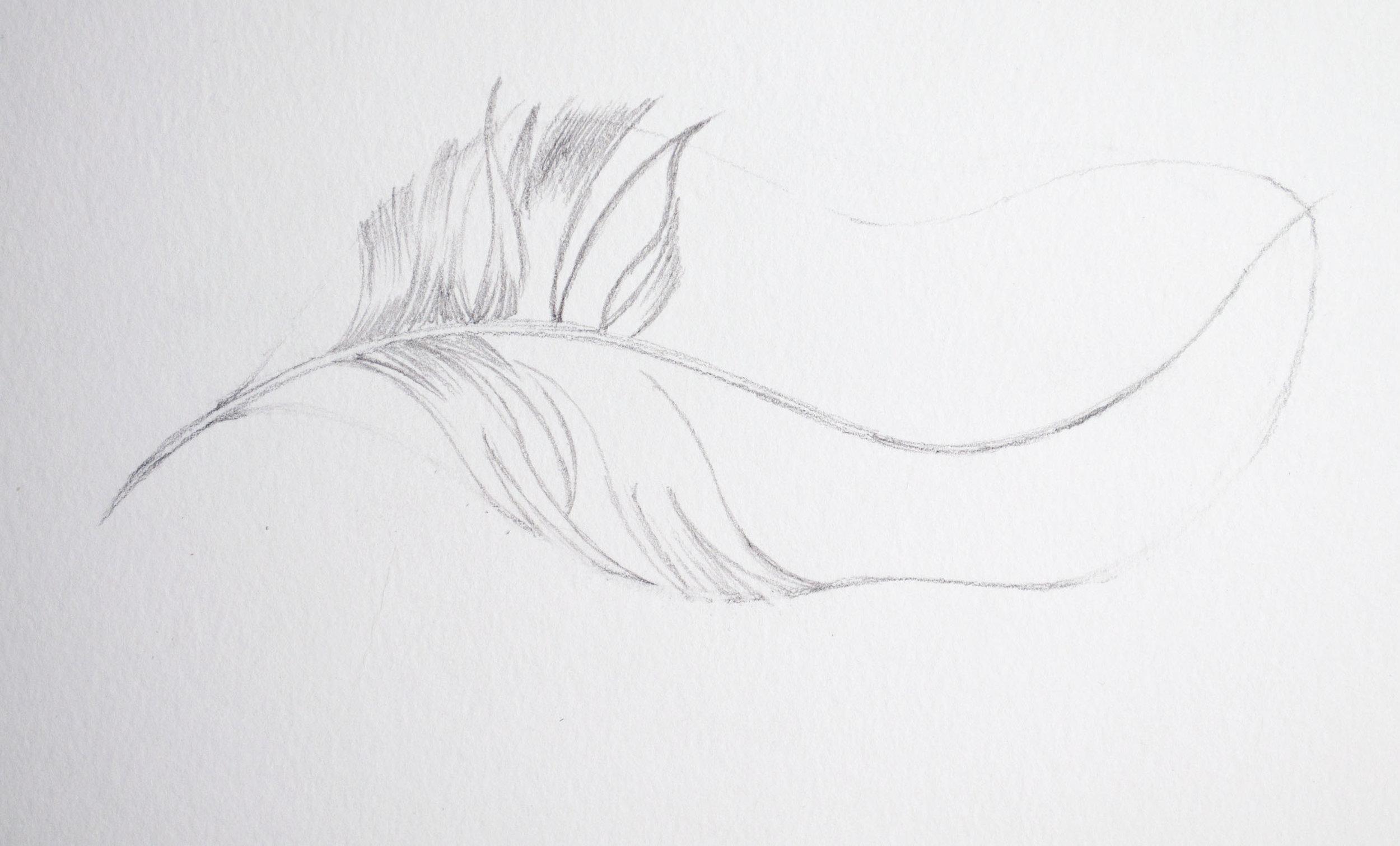 Caran DAche Feather Image 2.jpg