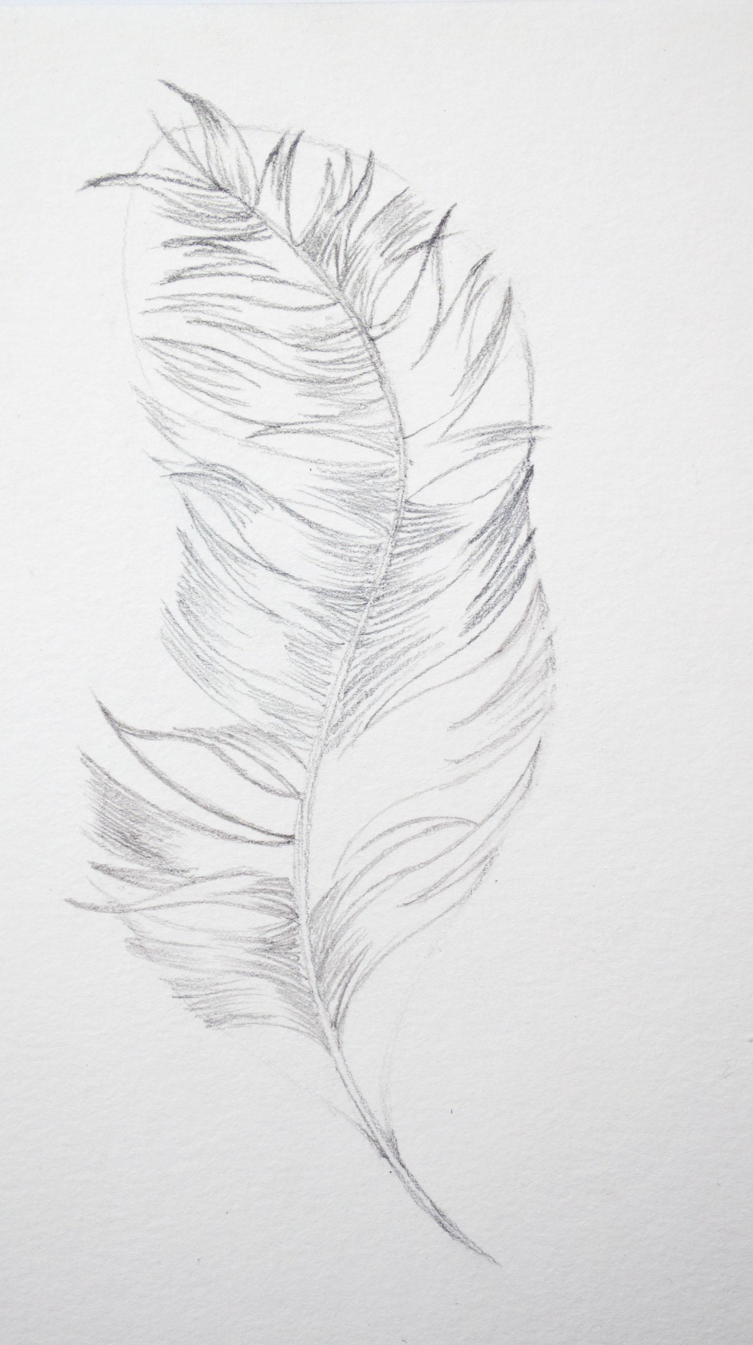 Caran Dache Feather Image 5.jpg