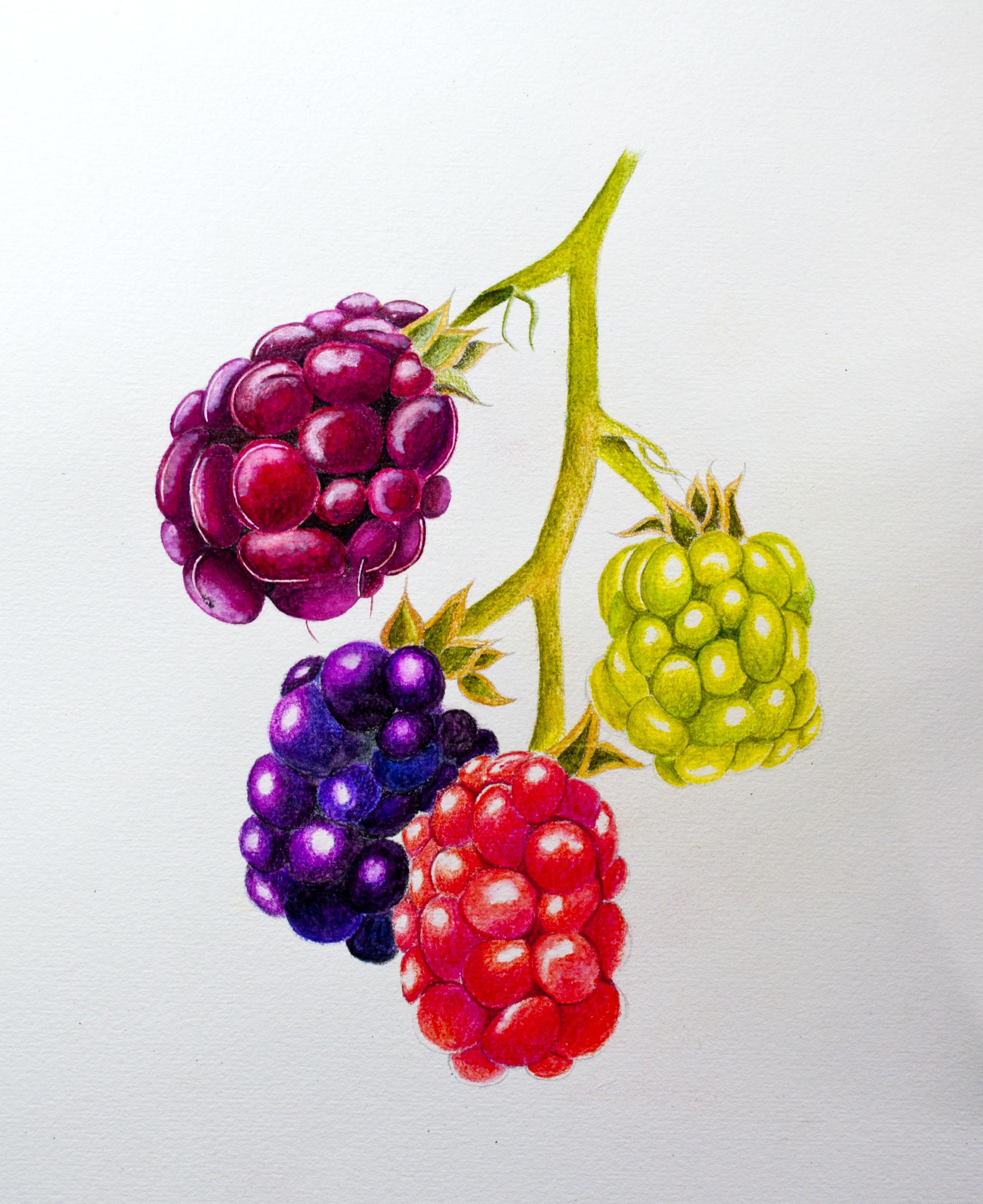 Arteza Botanical Image 3.jpg