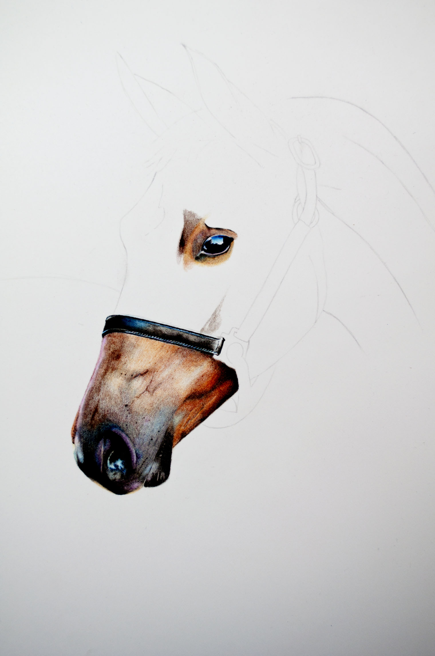 SF Horse Speed Drawing Image 3.jpg