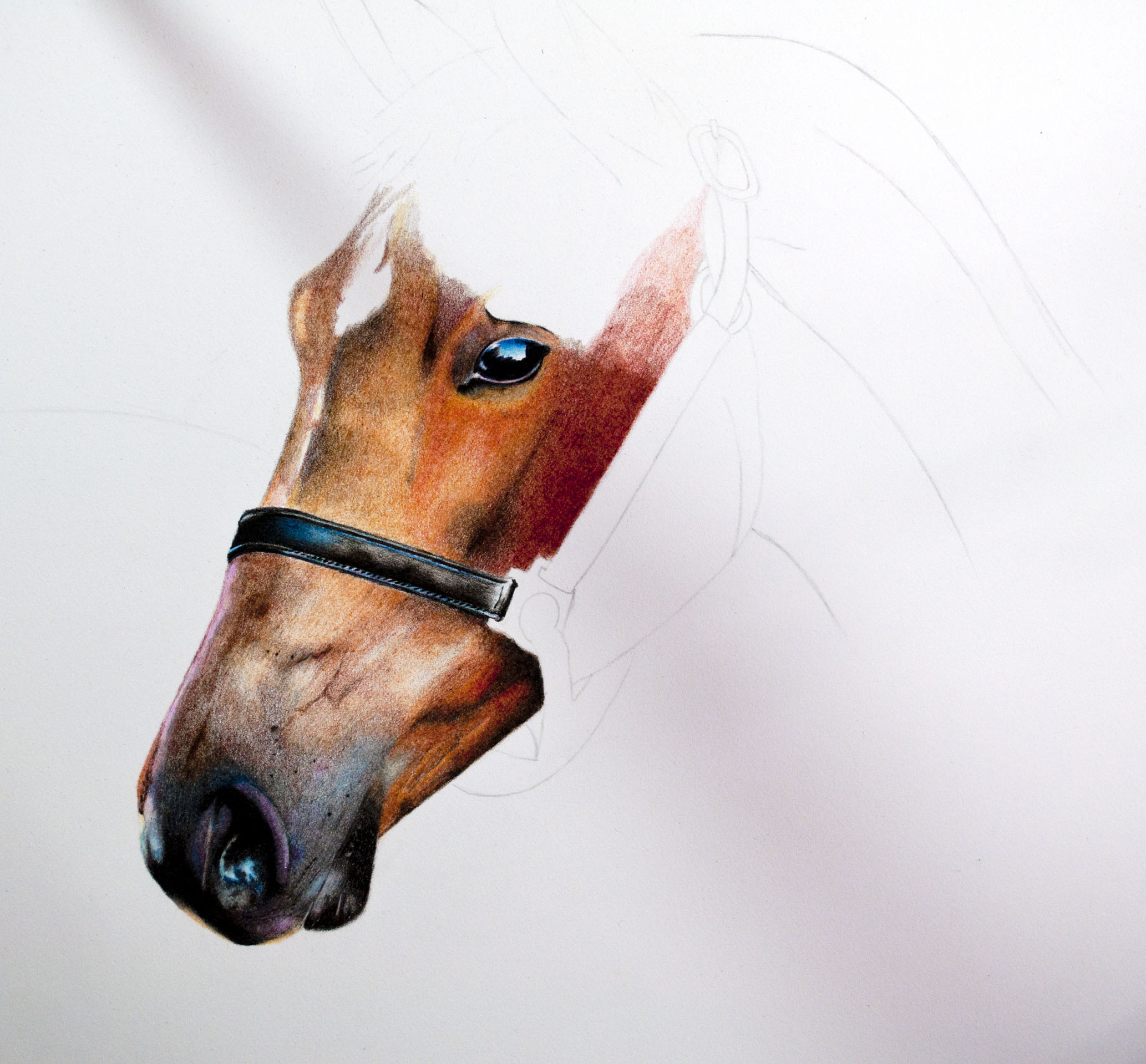 SF Horse Speed Drawing image 6 .jpg