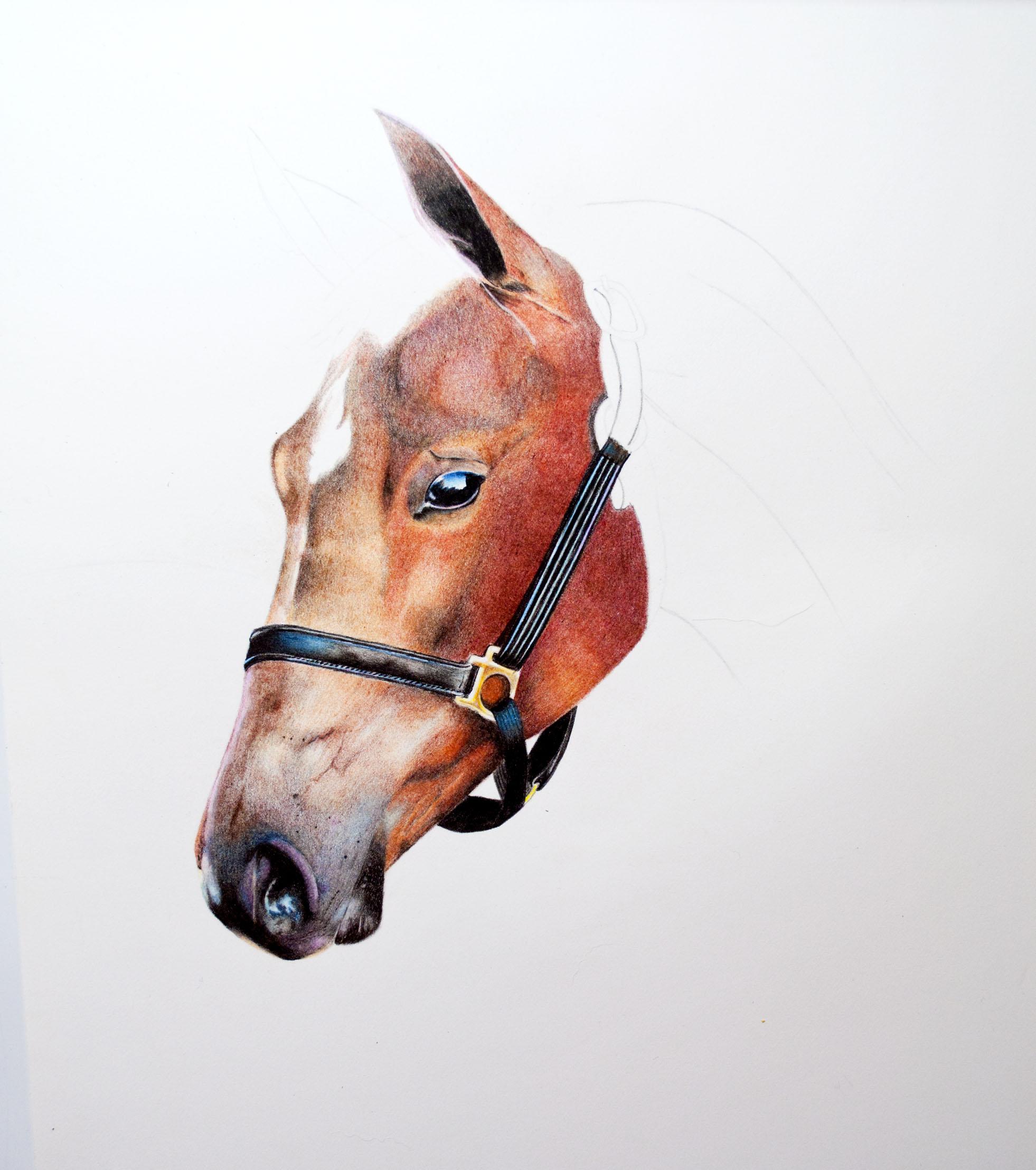 Horse Image 8.jpg