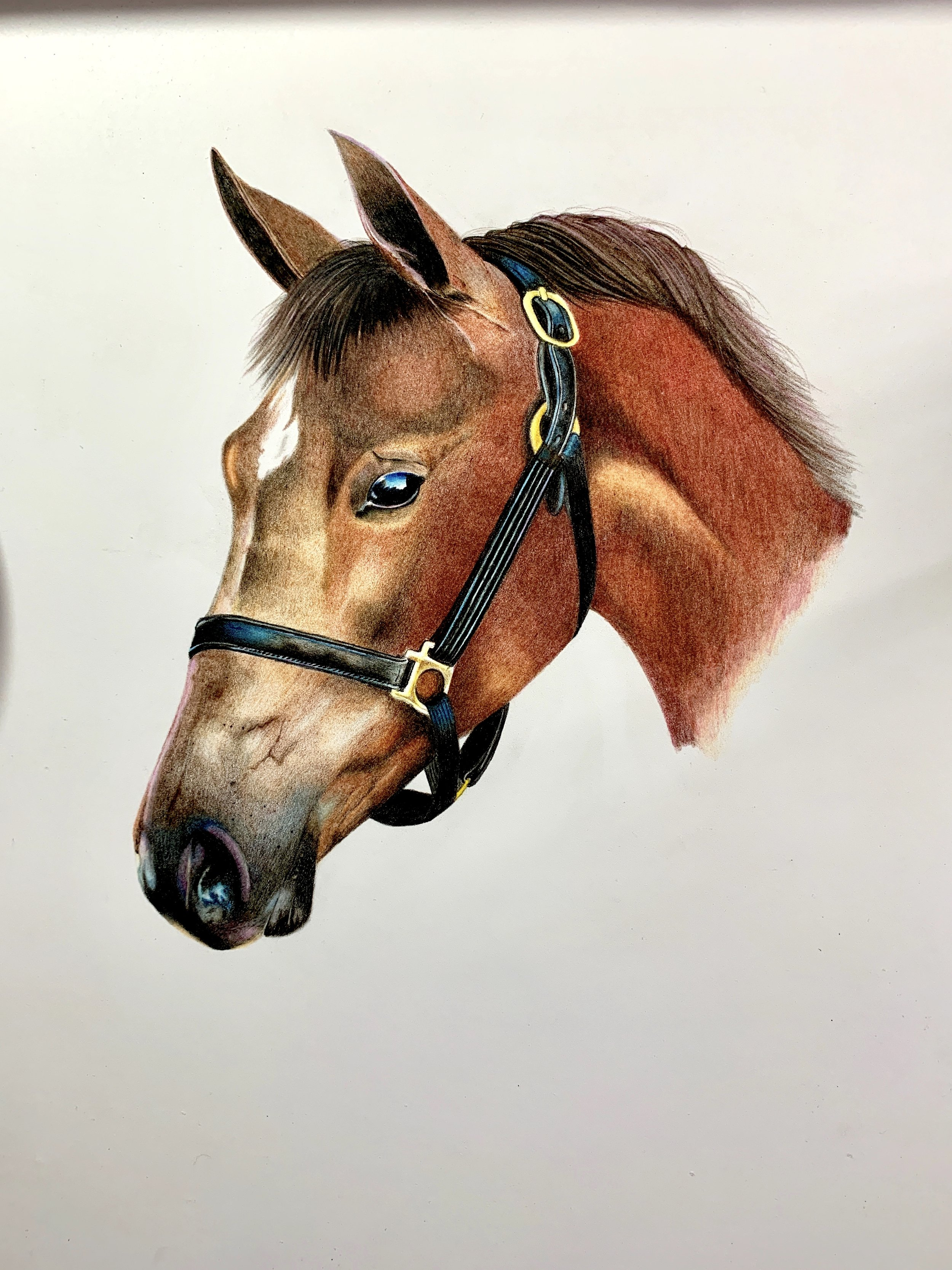 Schpirerr Farben Colored Pencil Speed Drawing Of Horse The