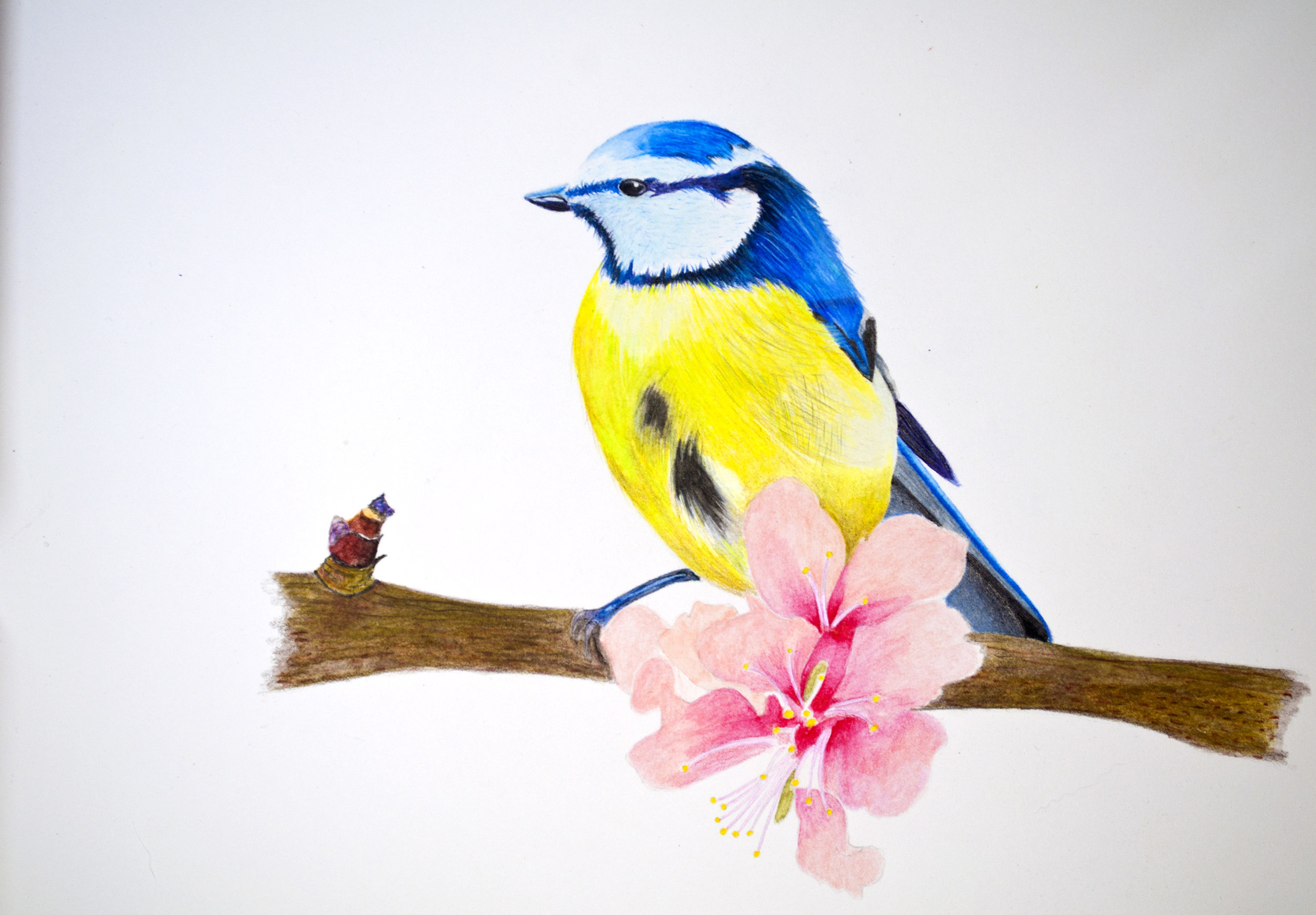 Prismalo Bird, Branch and FLowers.jpg