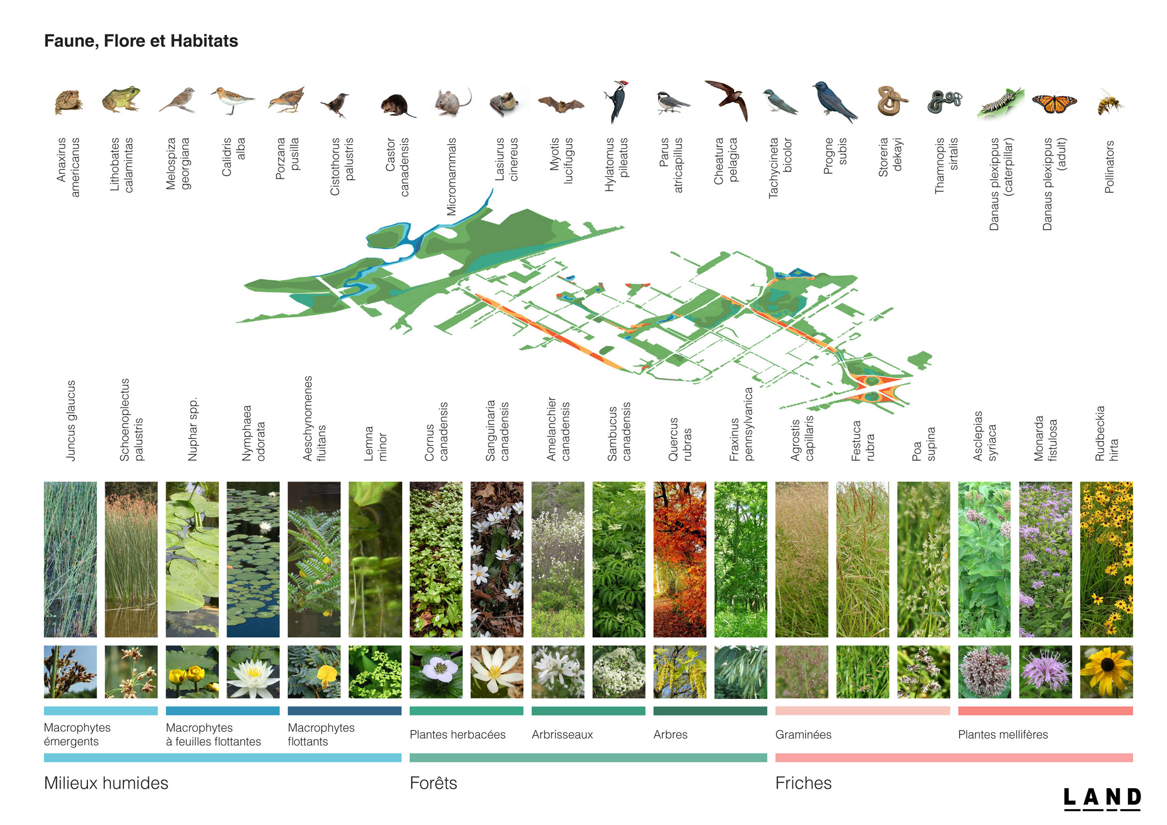 LAND_Corridor Biodiversité_Habitat.jpg