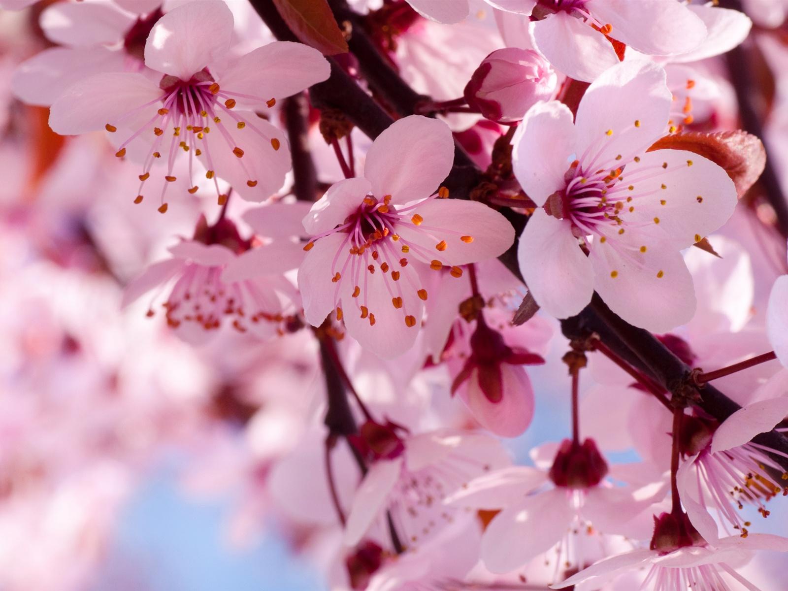 Sakura Women's Program