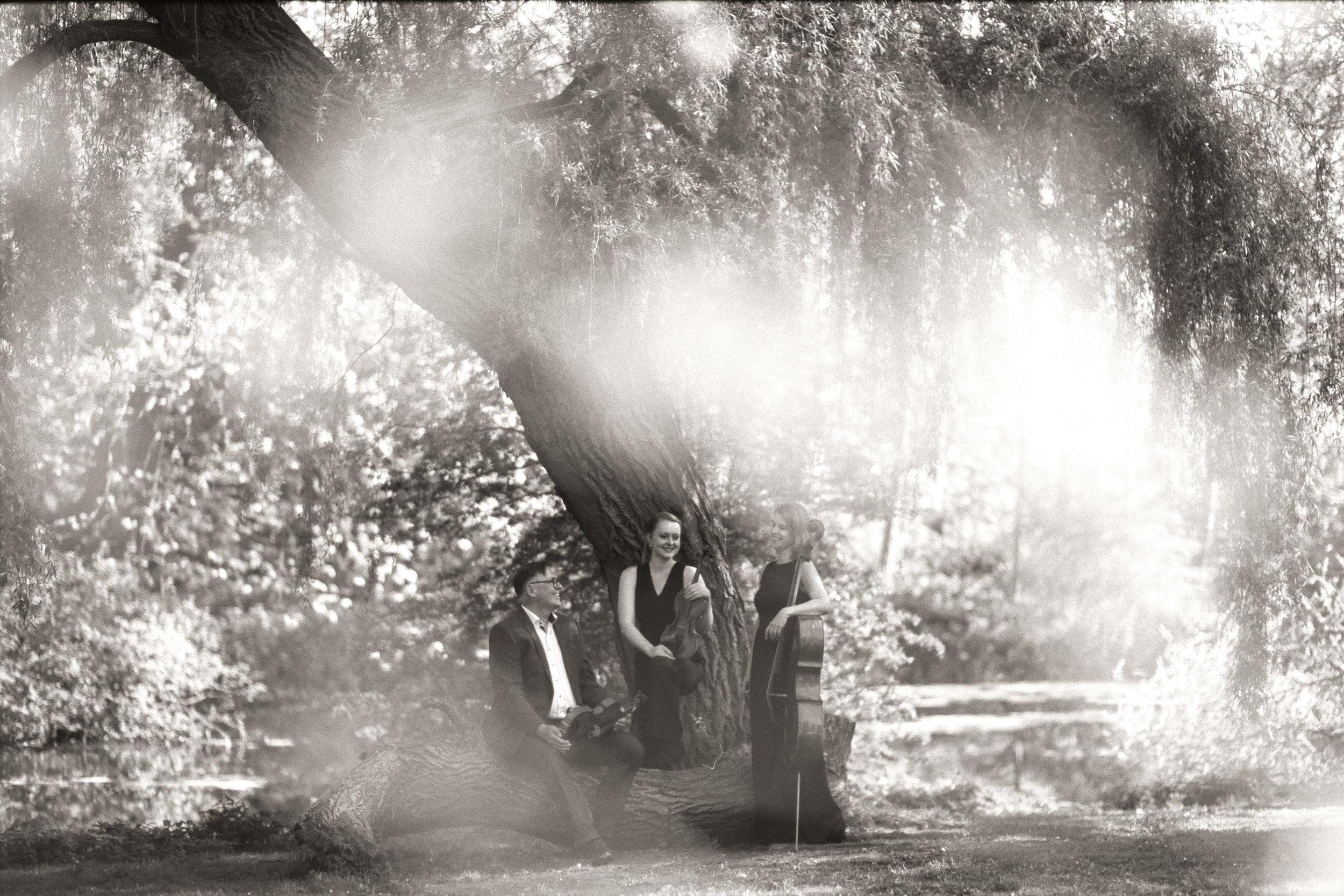 Dahlia String Trio by caroline bittencourt 012.jpg