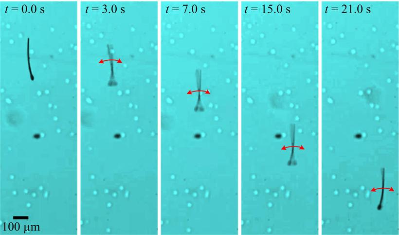 Sperm-inspired nanobots controlled through electromagnetic oscillations. (University of Twente & German University in Cairo)