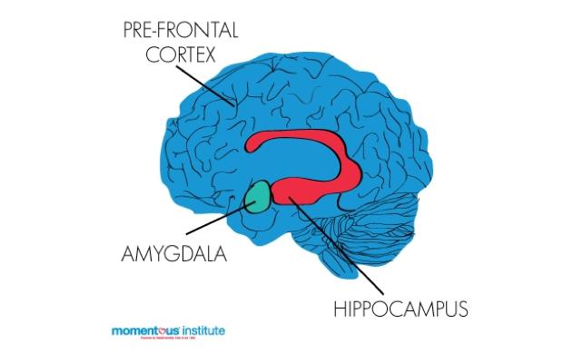 The brain's emotion regulation system