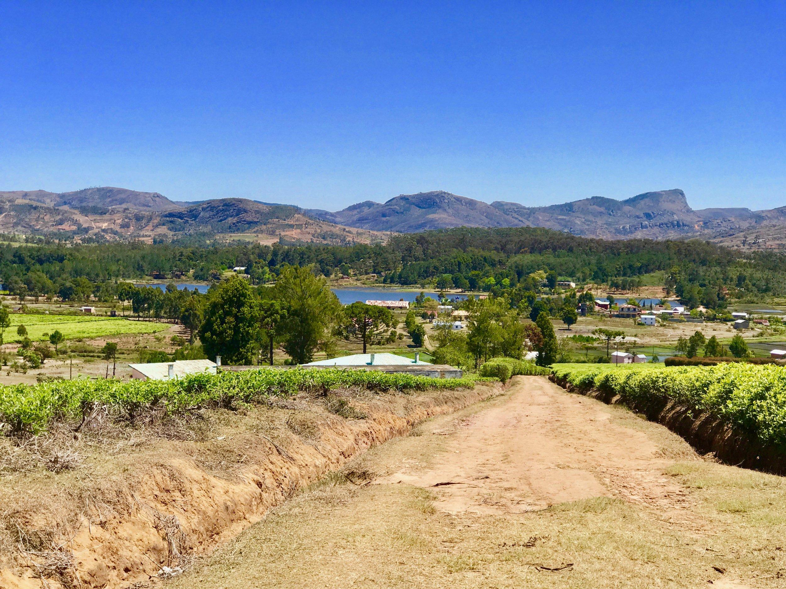 A view of Sahambavy from the tea fields. Photo by Jennifer Manzanillo