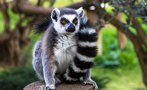 MadagascarWildlife7.jpg