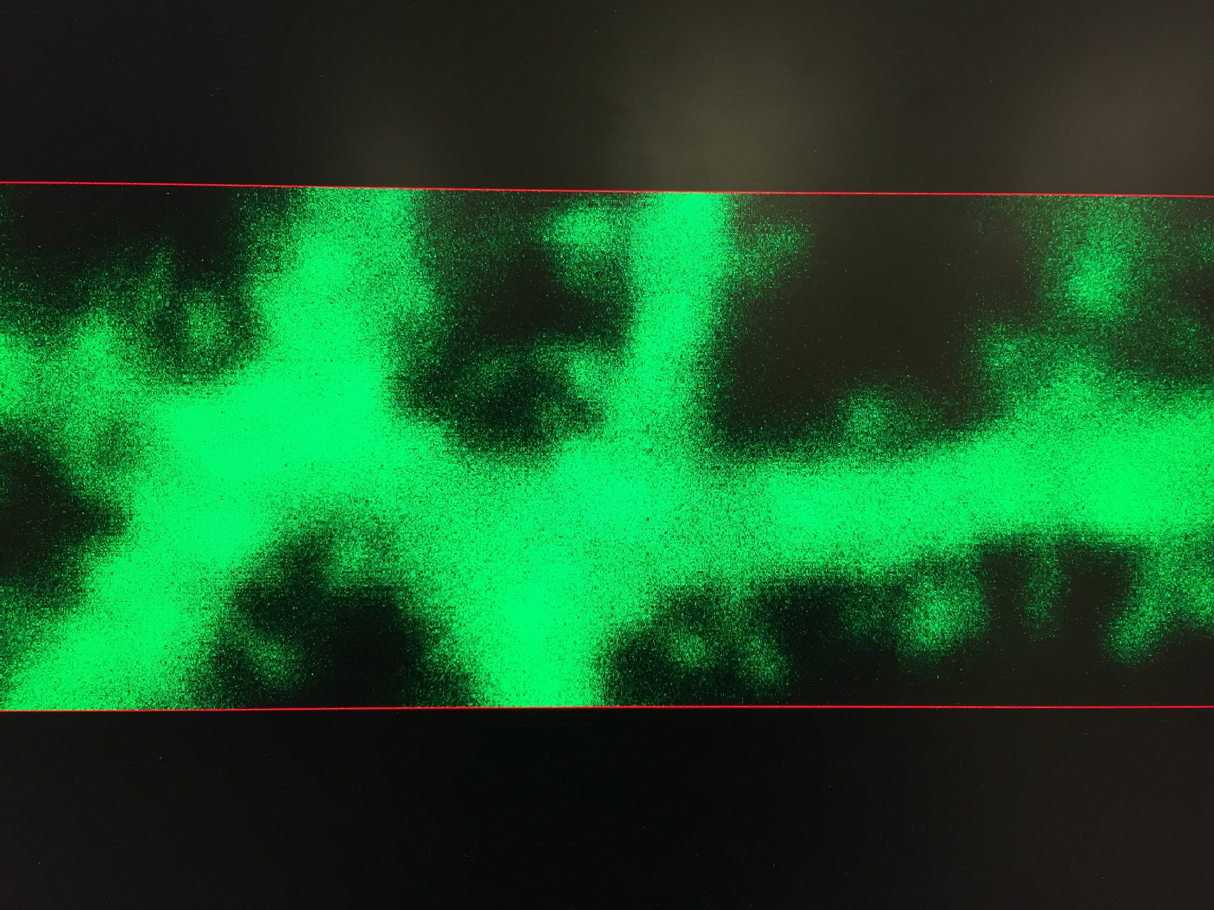 A dendrite filled with green fluorescent dye