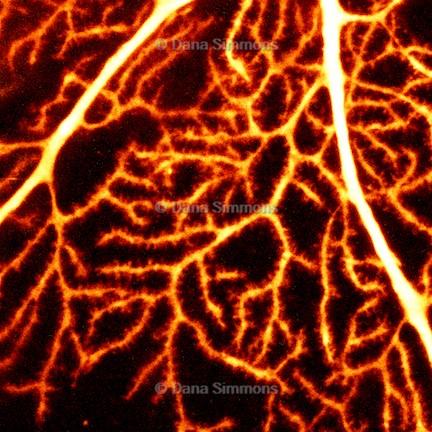 Dendrites 3.jpg