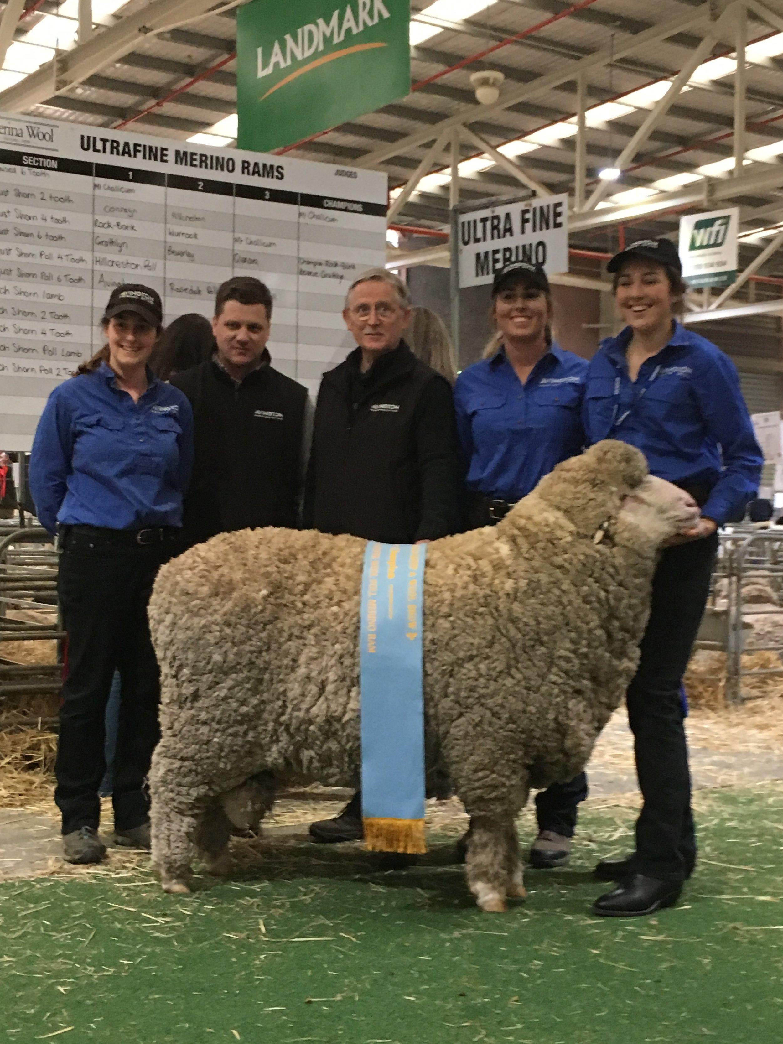 Ram 160047, winner 2018 Champion Ultrafine Poll Merino Ram, Australian Sheep and Wool Show, Bendigo