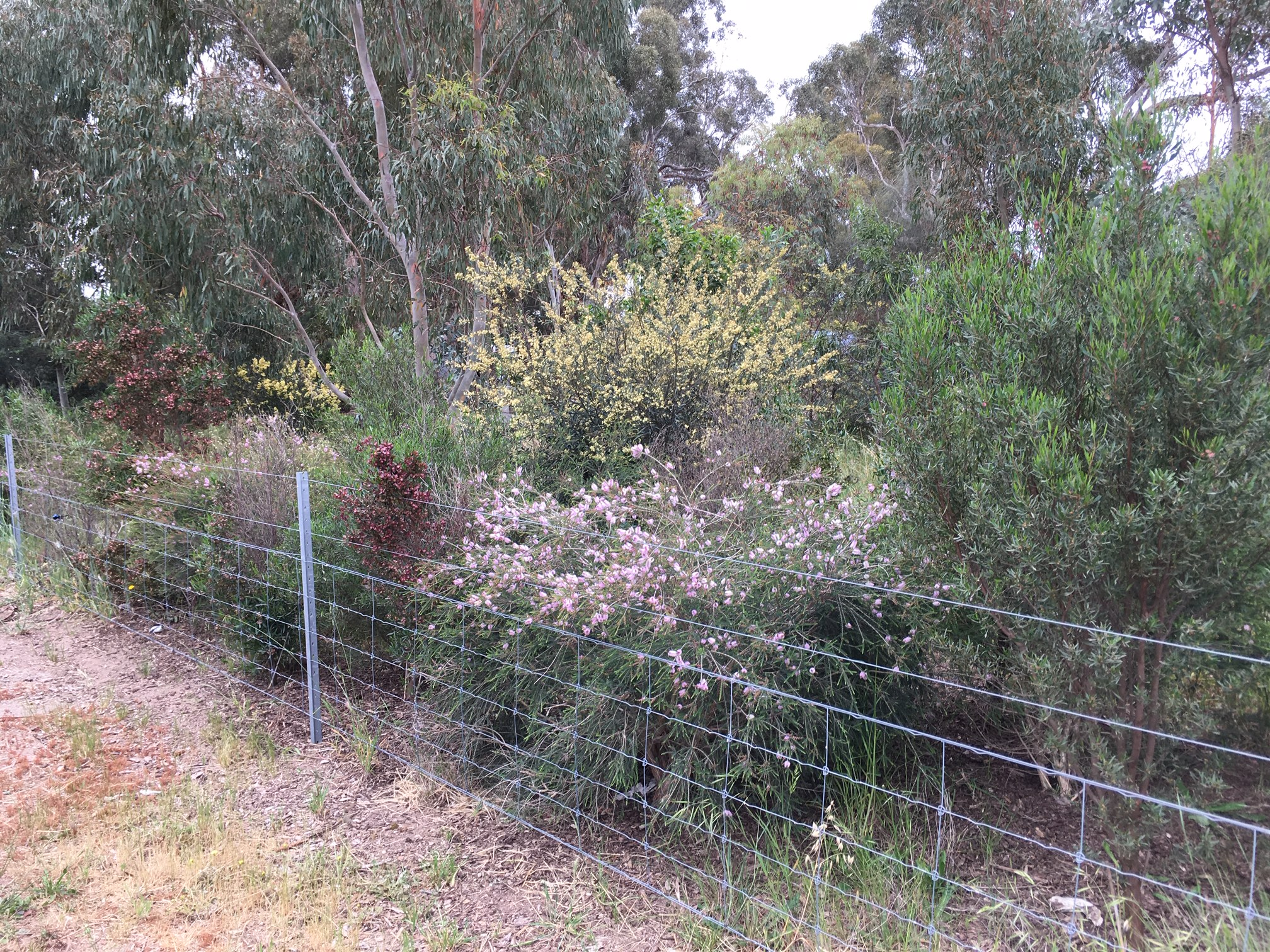 fenced off areas for revegetation