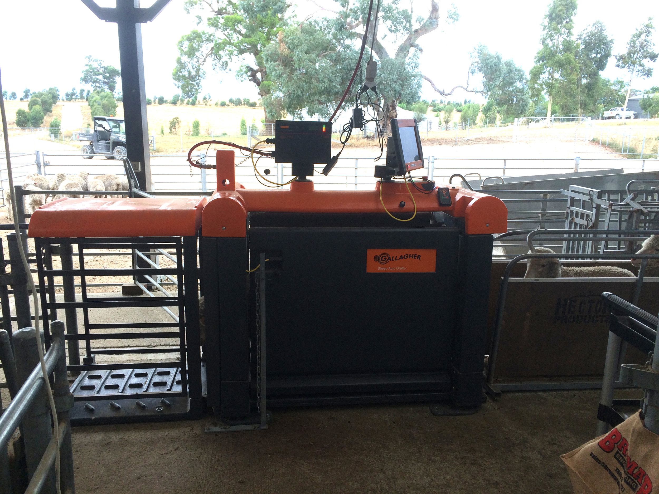 The Auto draft separates sheep quickly with minimal handling
