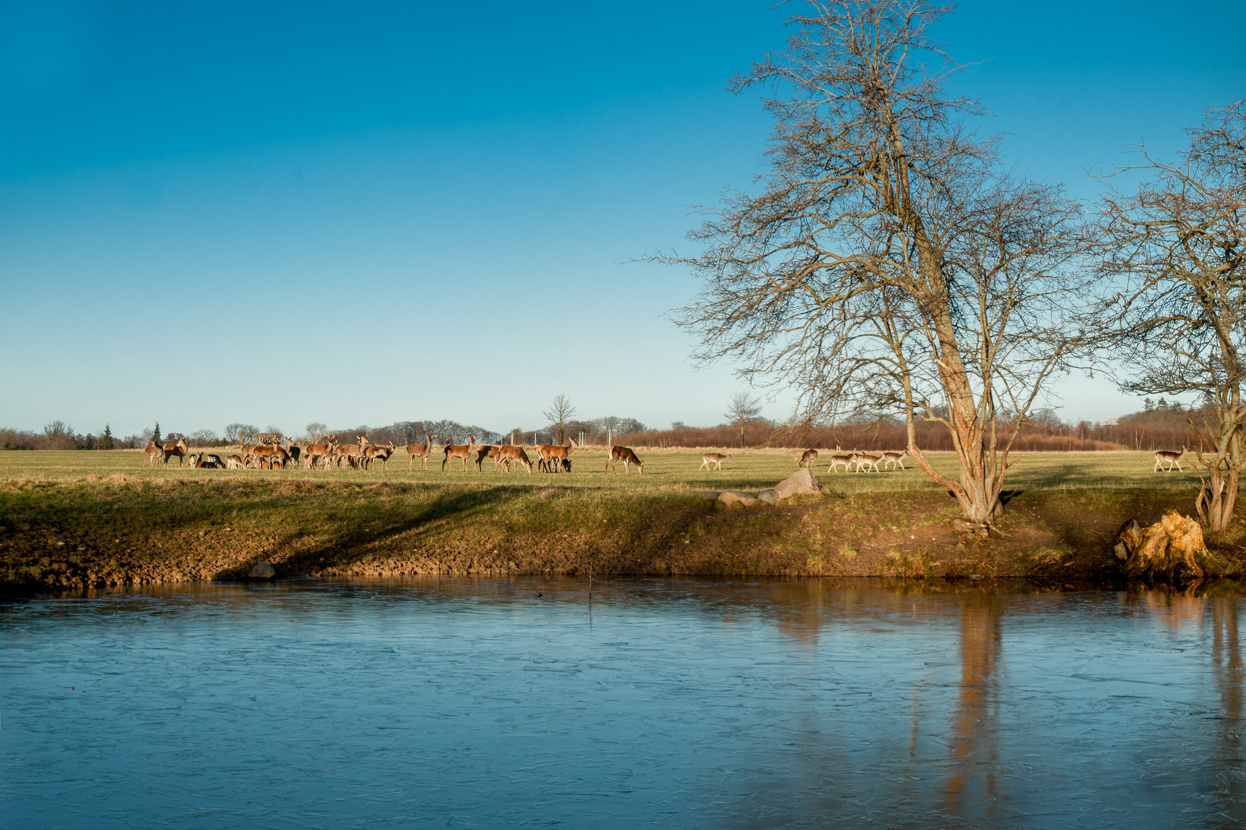 Zoomed in panorama of the deer and frozen lake. Nikon D200.