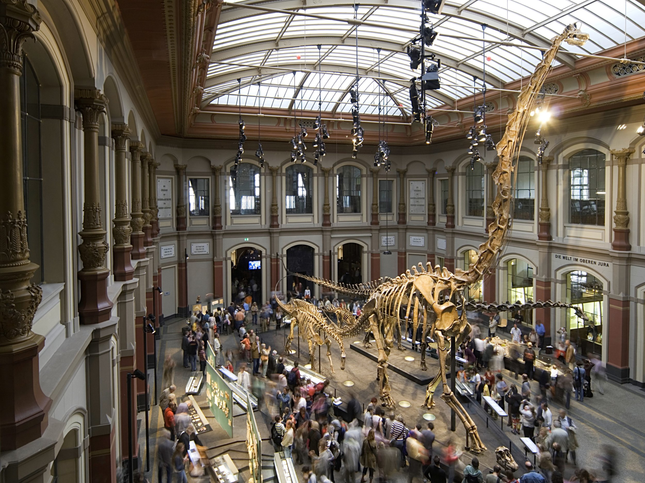 Figure 2: Exhibition Hall of the Museum für Naturkunde Berlin with the skeleton of the  Brachiosaurus brancai  standing in the middle © Carola Radke.