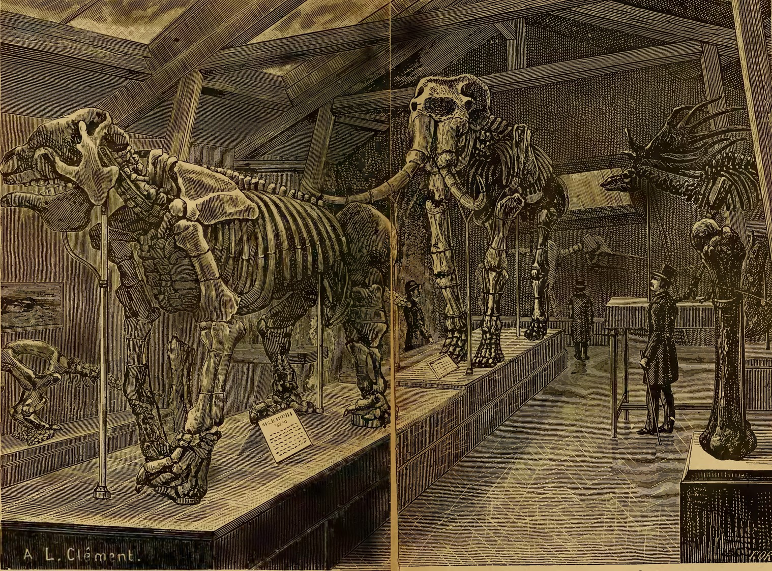 Gallery of Palaeontology in Paris, from Albert Gaudry,  Les   ancêtres de nos animaux dans les temps géologiques  (1888)  Image from the Biodiversity Heritage Library. Digitized by Harvard University, Museum of Comparative Zoology, Ernst Mayr Library.  www.biodiversitylibrary.org