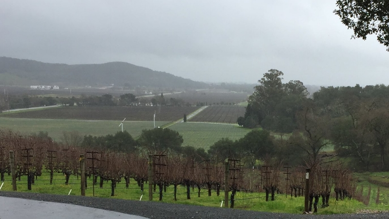 Front vineyard in Stags Leap District.